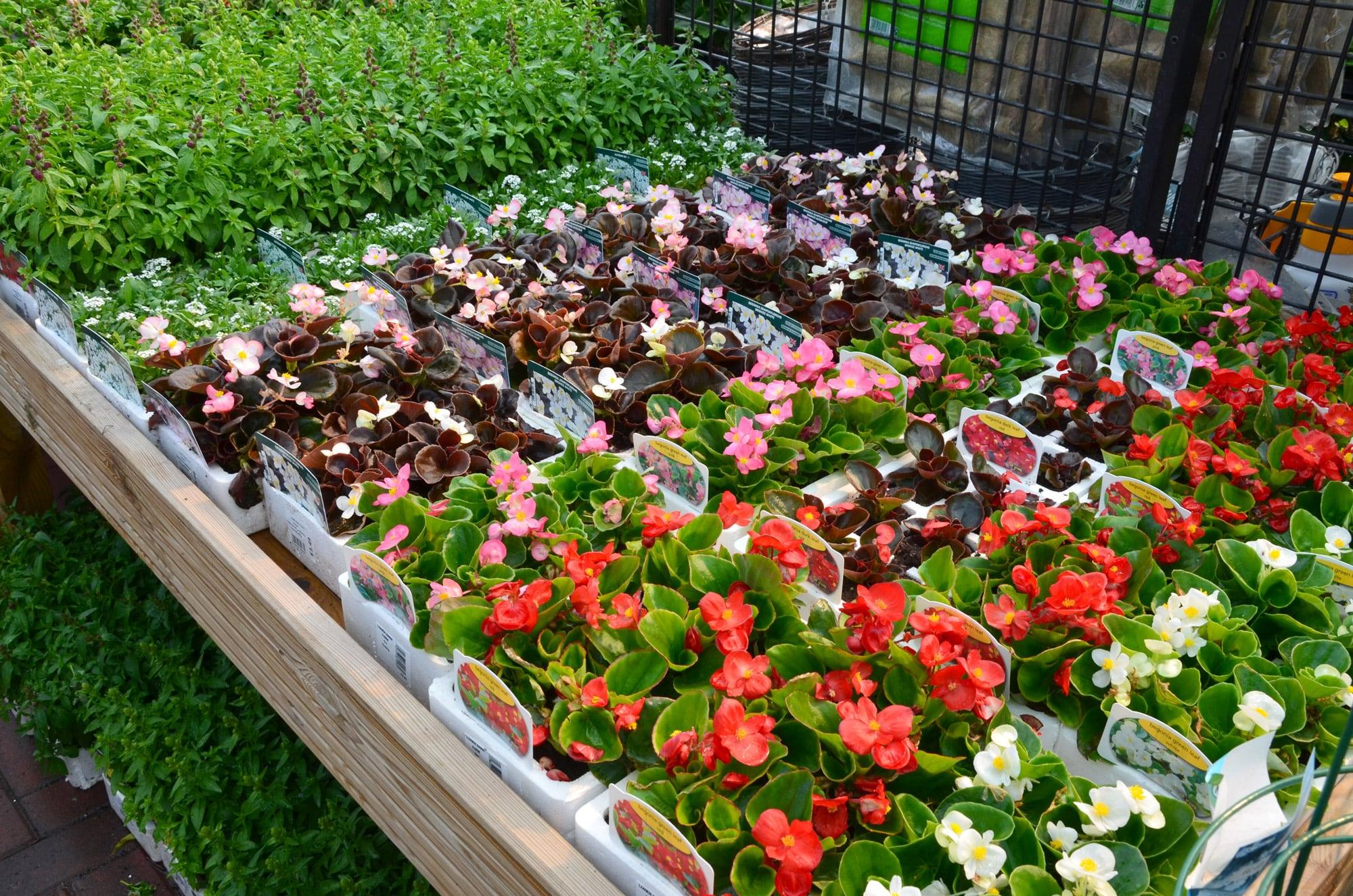 Lower-barn-gardencentre-summer-bedding-min.jpg