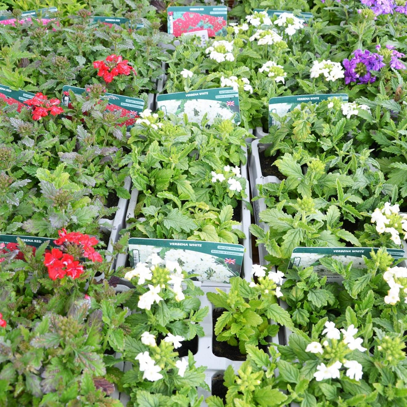 bedding, perennials, shrubs, trees -