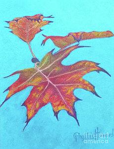 maple-glory-phyllis-howard.jpg