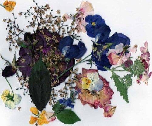 spring-petals043-e1549342054458.jpg