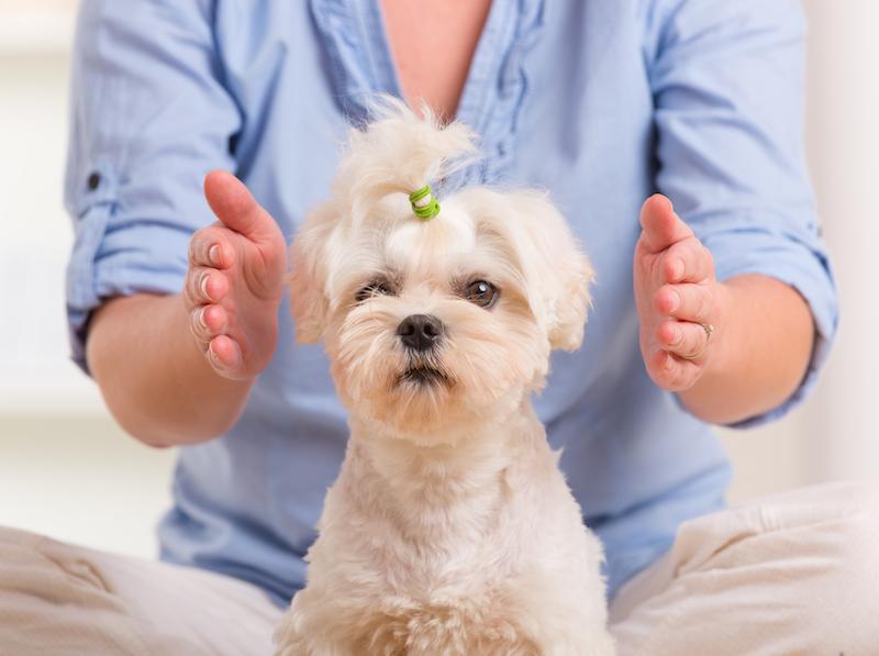 April Wyett Animal Reiki Holistic Healing Animals Des Moines IA.jpg