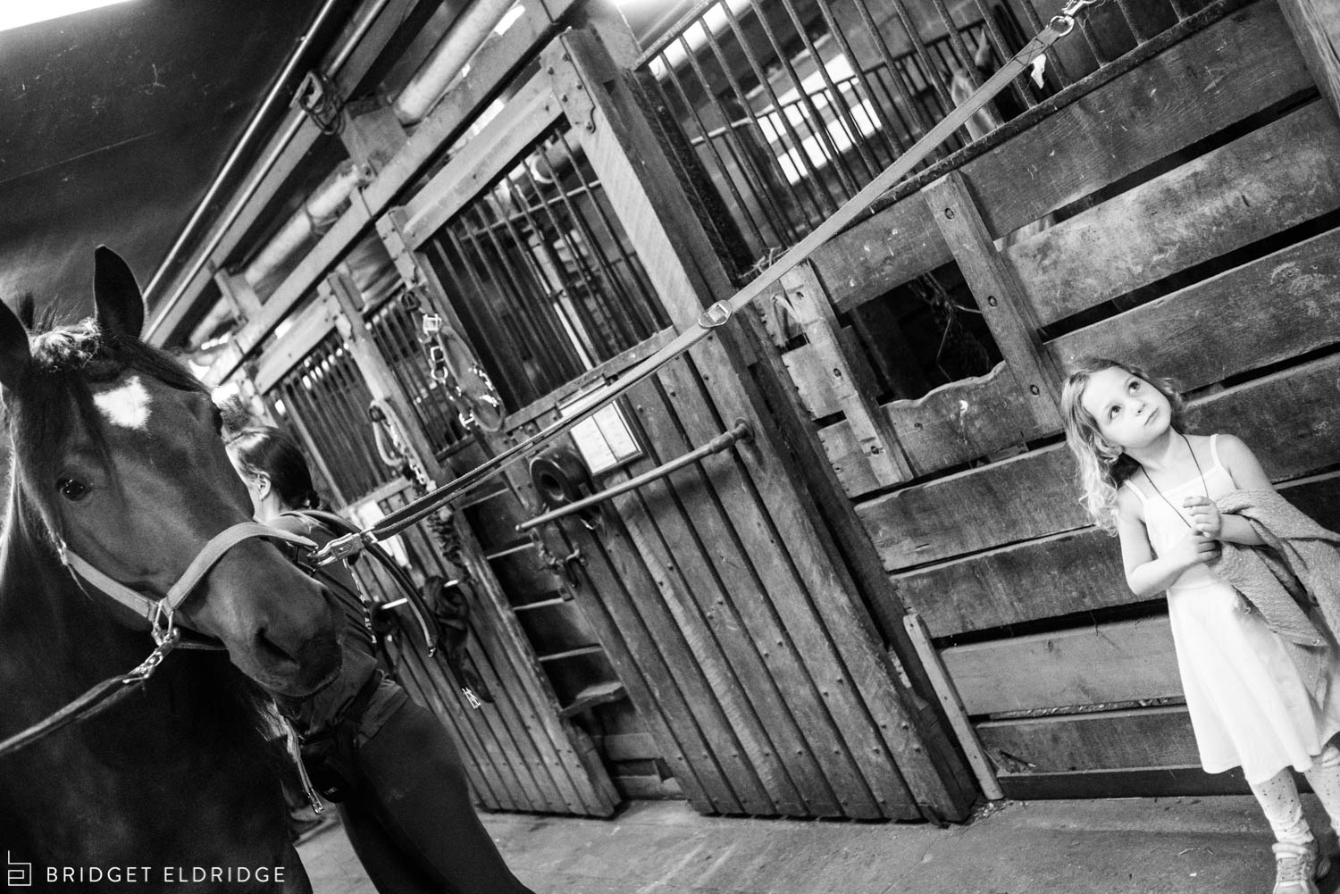 girl examines the horses at the rock creek park horse center