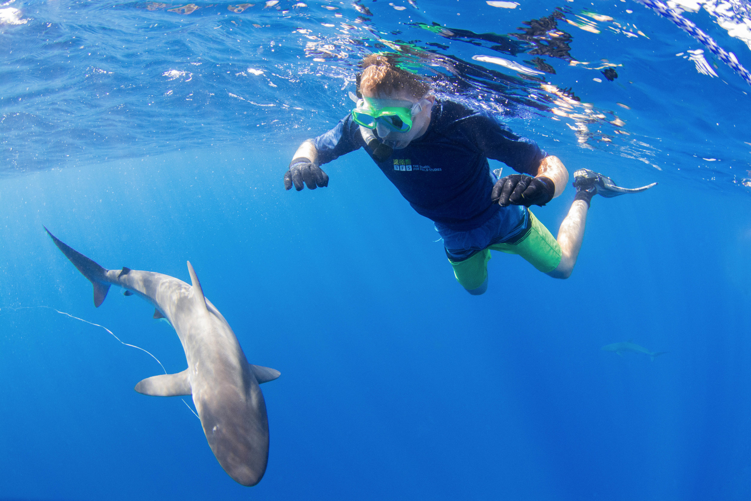 Guest Joe studies a silky shark with old, trailing fishing line- which we safely removed