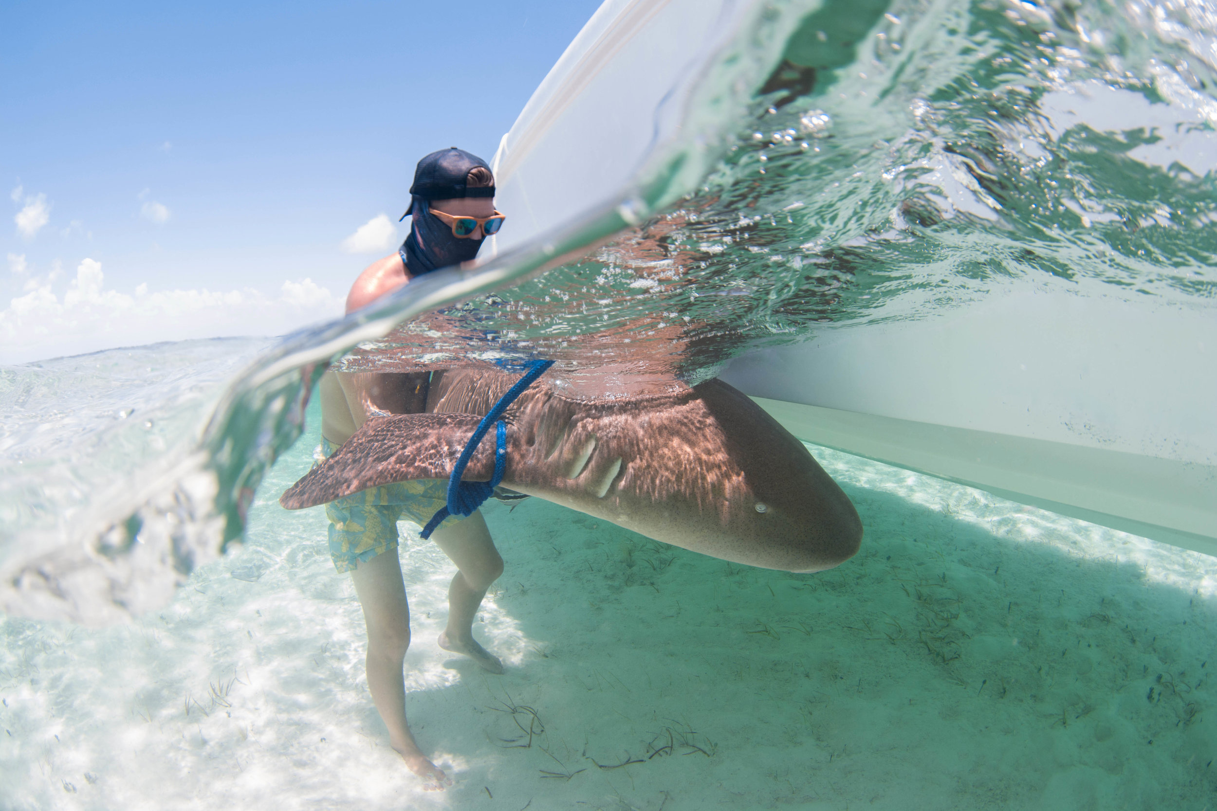 Guest Corey with an adult nurse shark