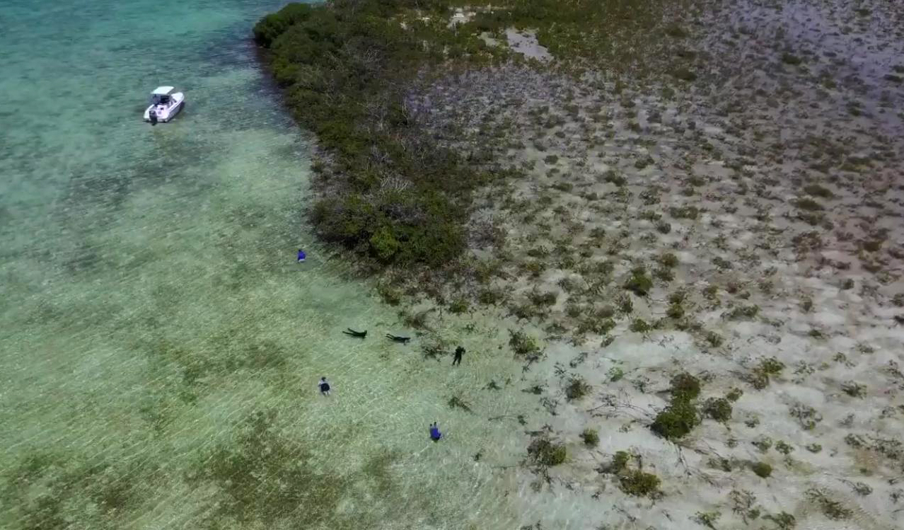 Snorkeling the mangrove forests