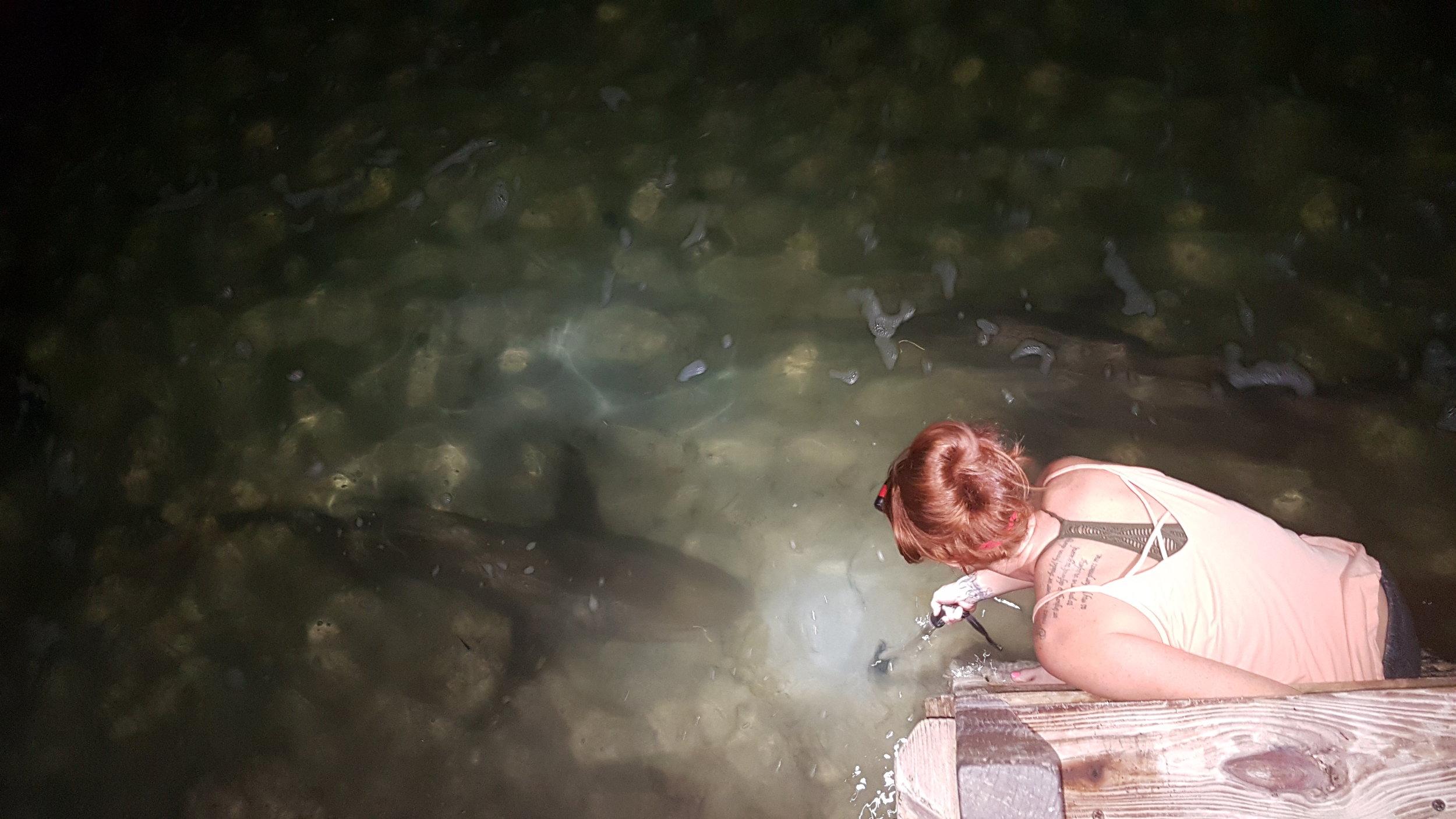Annie with a subadult lemon shark on the lodge dock
