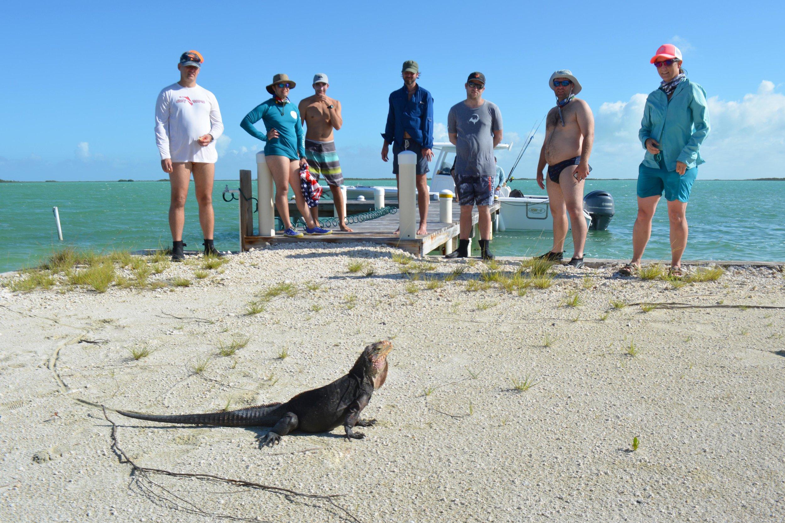 A friendly iguana strikes a pose