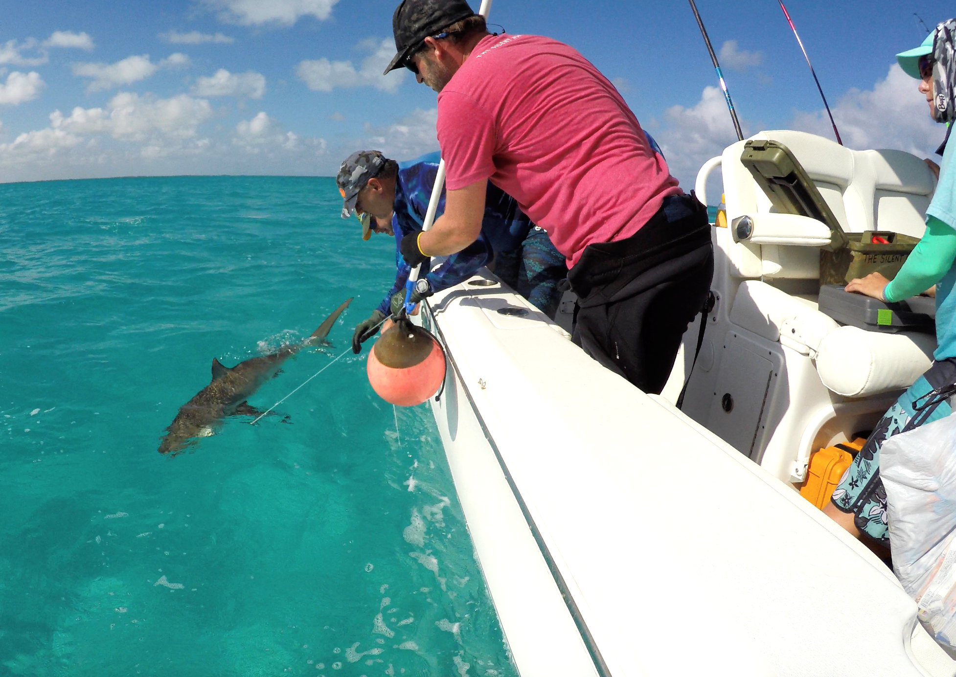 Guests Andy and Nicky help Tristan secure the shark