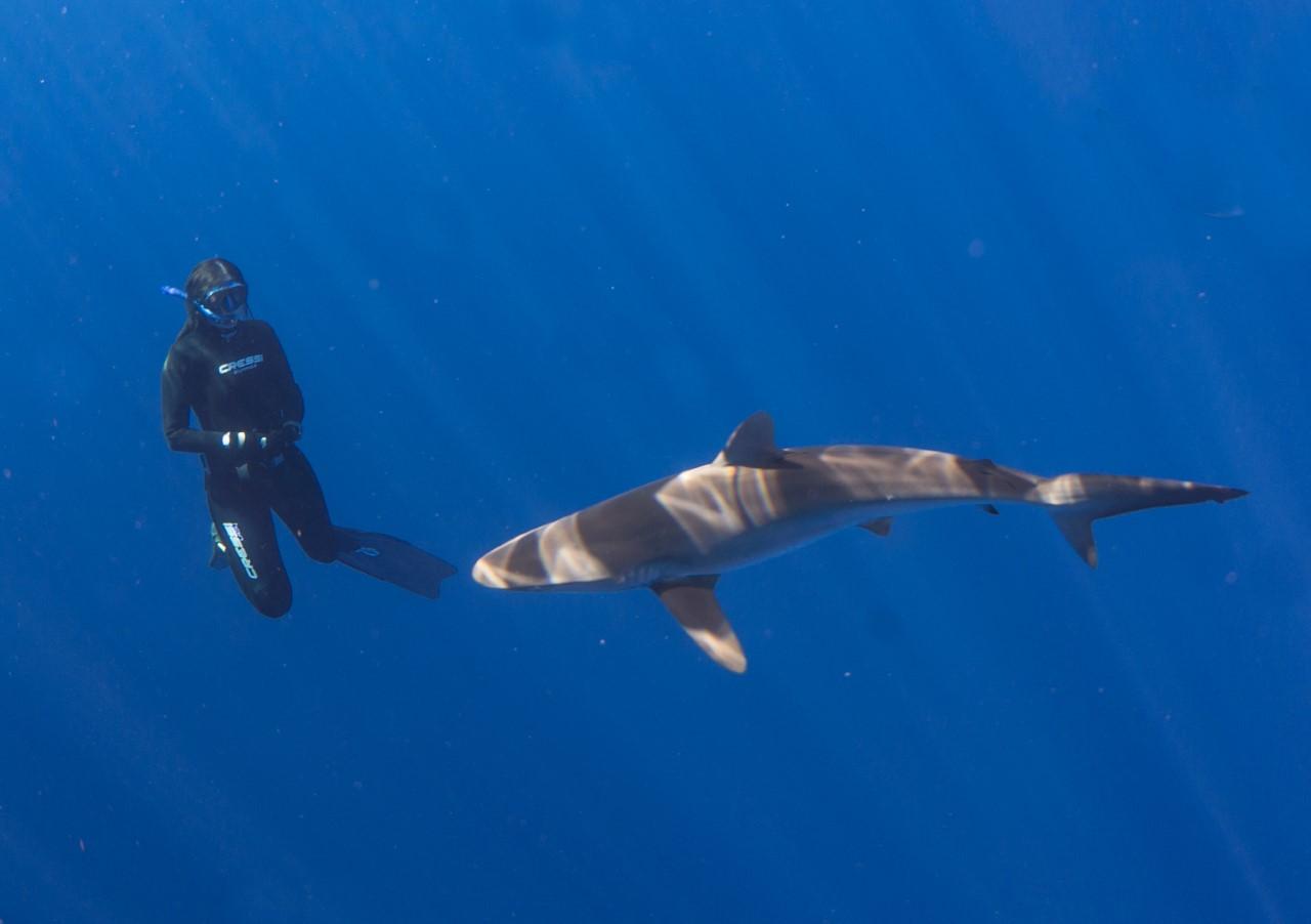 thumbnail_Day 2 - Silky Shark w- Jennifer.jpg