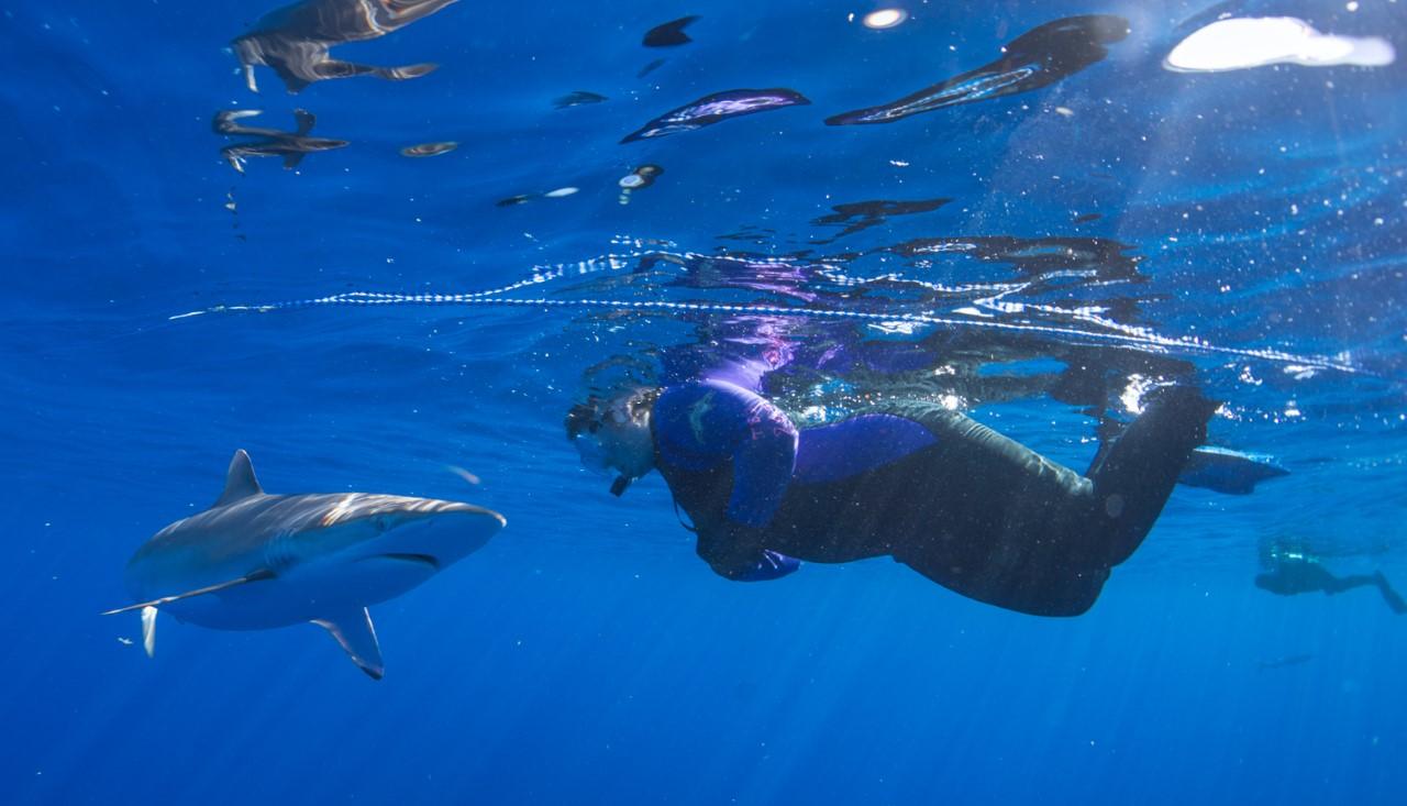 thumbnail_Day 2 - Silky Shark w- Jenni.jpg
