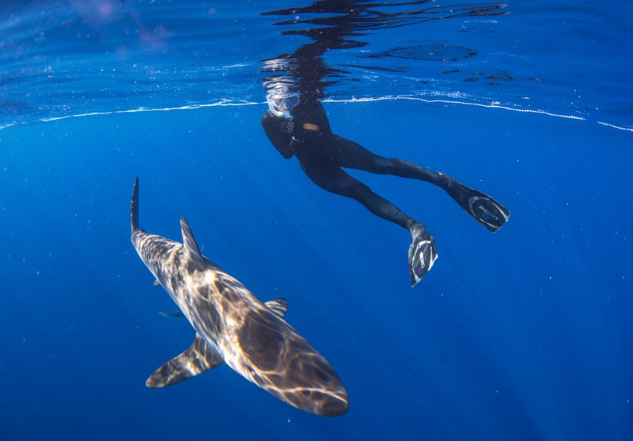 thumbnail_Day 2 - Silky Shark.jpg