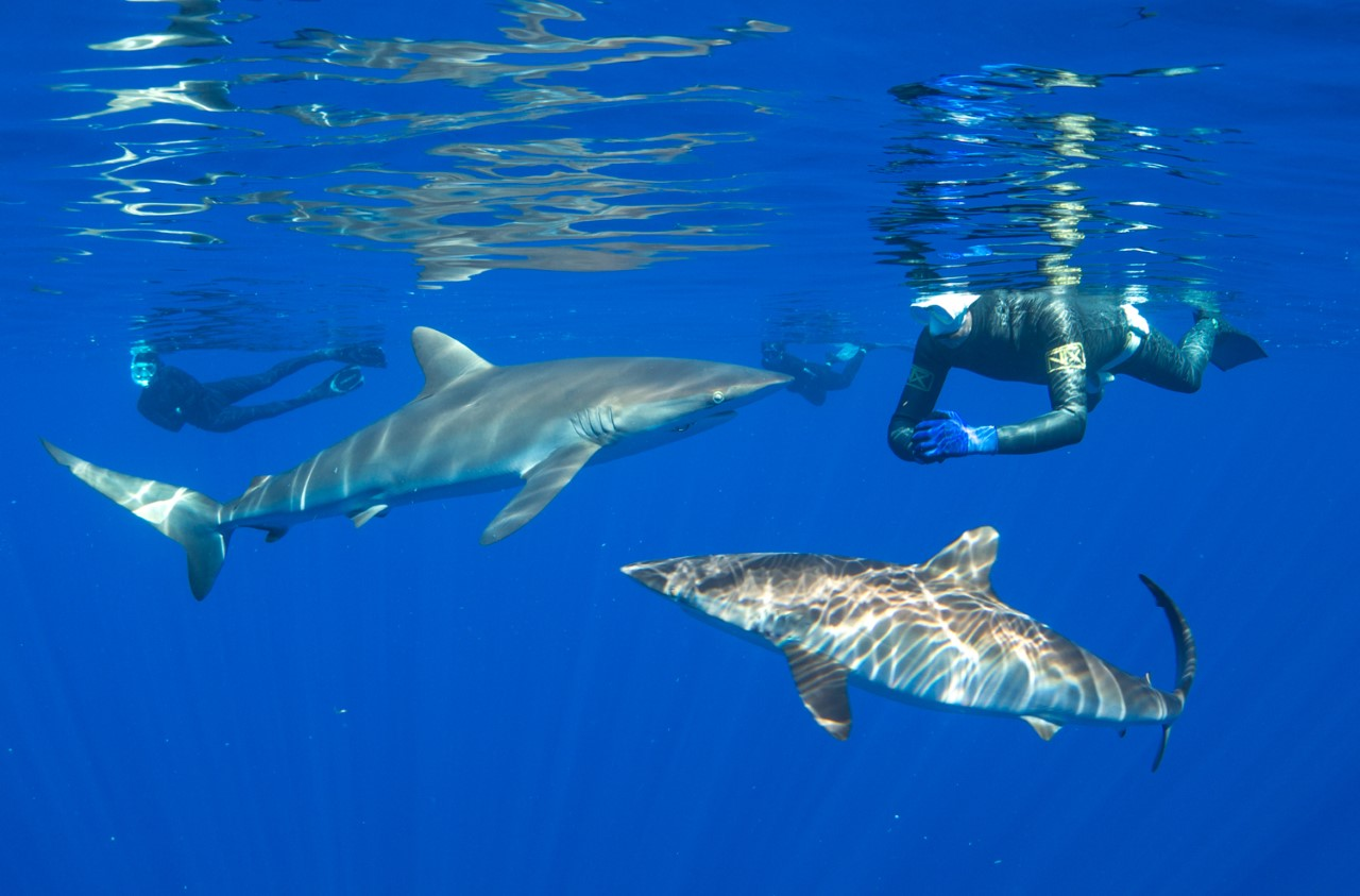 thumbnail_Day 5 - Silky Sharks w- Caily & Matt.jpg