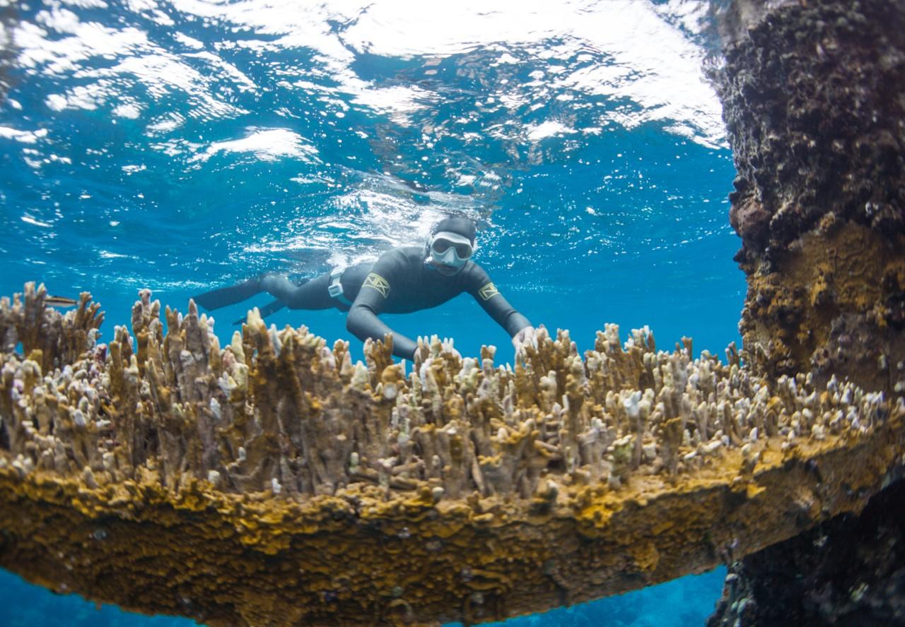 Guest Matt views the corals beneath Spider Tower