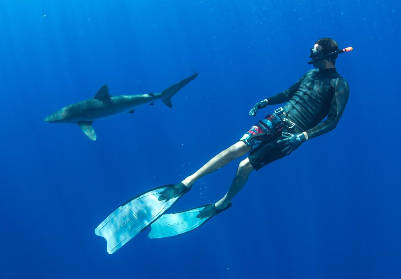 thumbnail_Day 7 - Silky Shark w- Alex 2.jpg