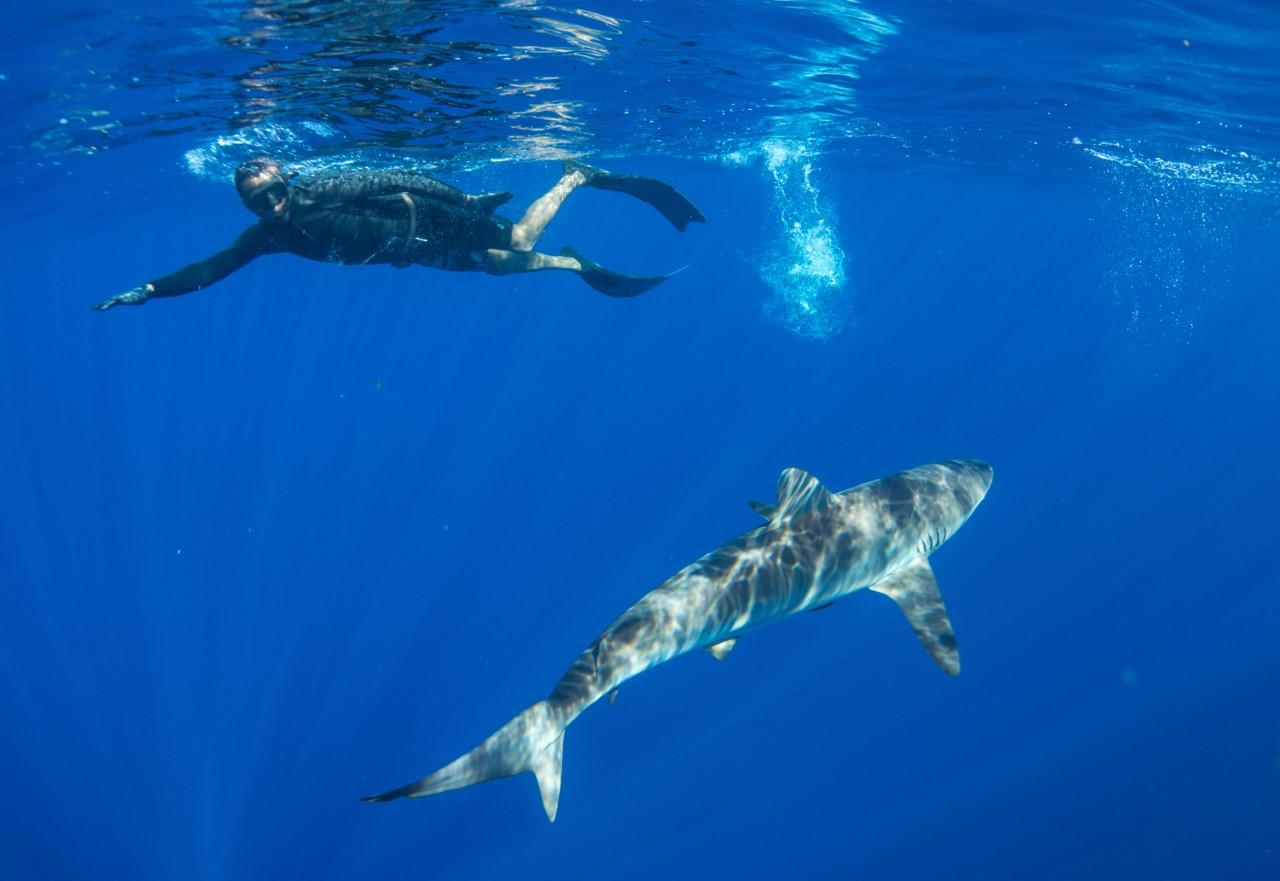 thumbnail_Day 7 - Silky Shark w- Alex 3.jpg