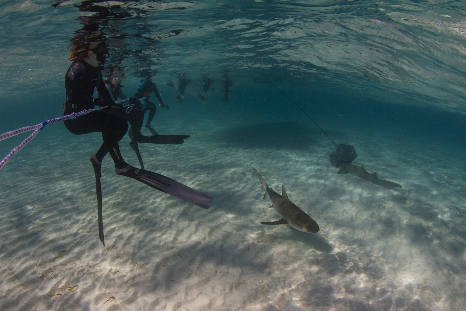 Expedition guests enjoy some quiet time with Caribbean reef, and nurse sharks