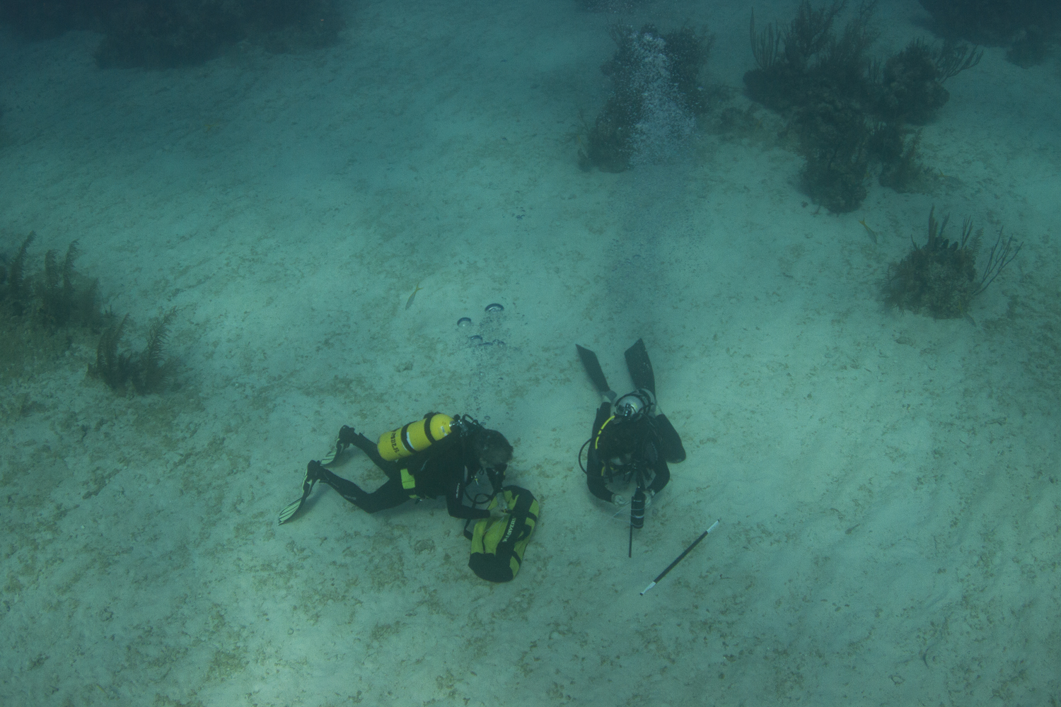 Receivers are deployed in a variety of habitats from sandy bottoms, to coral reefs, to mangrove fringes, to deep water.