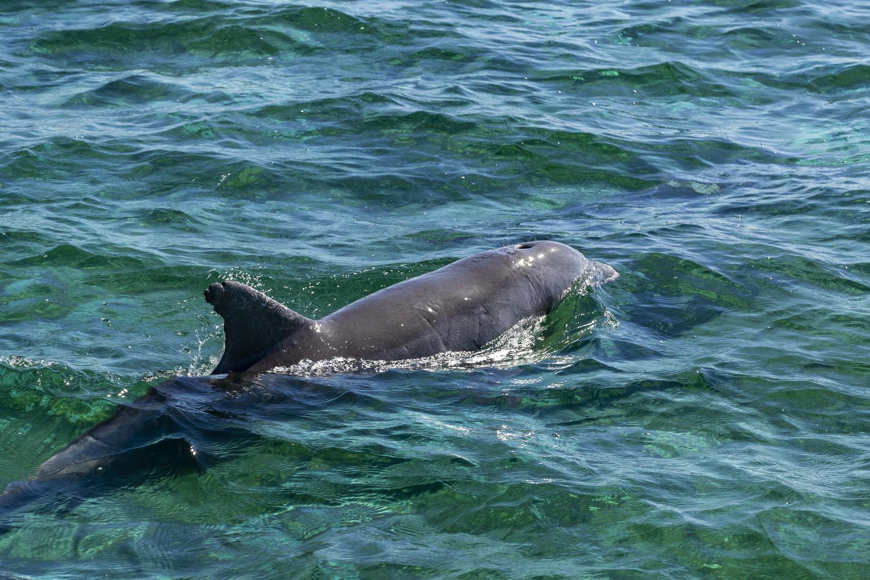 Dolphins, everywhere!