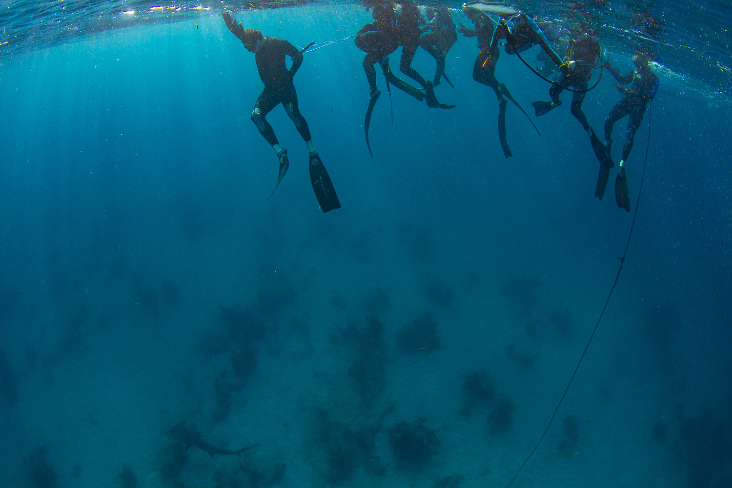 Guests stick together to avoid spooking the hammerhead away