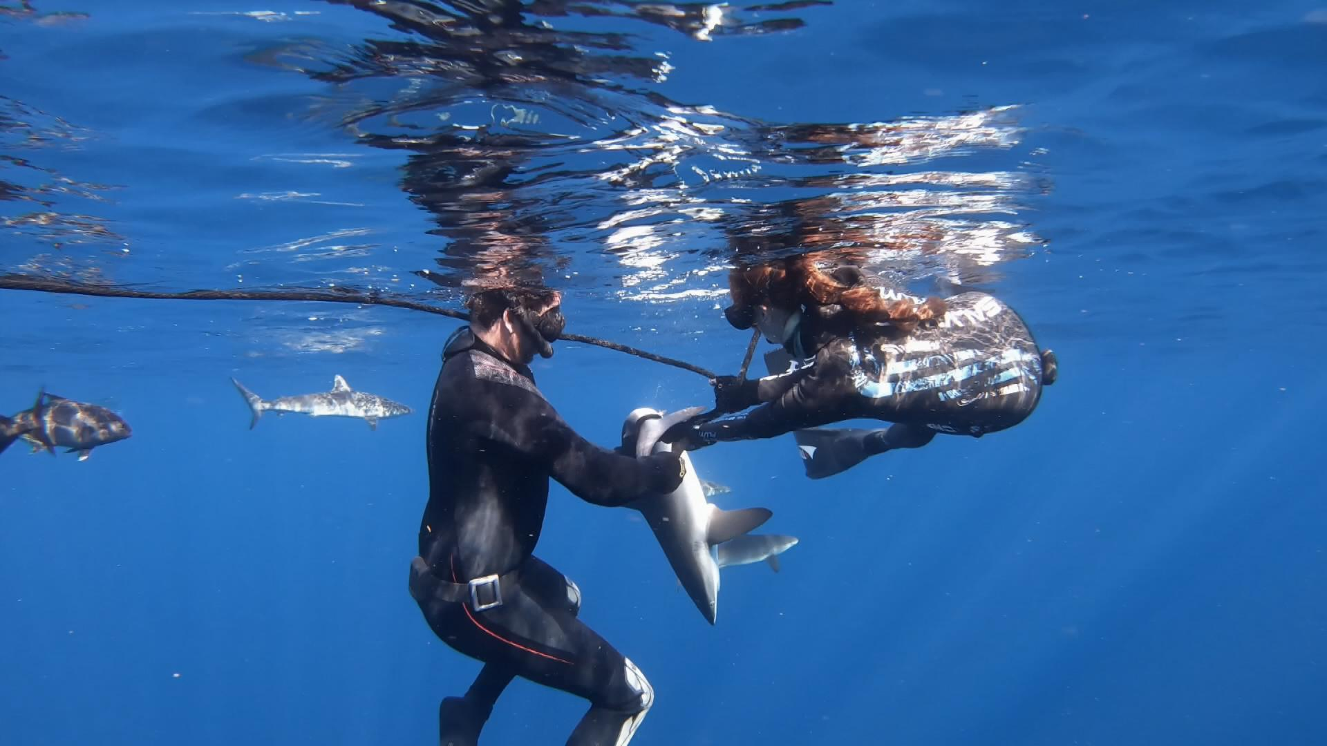 silky shark capture underwater.jpg