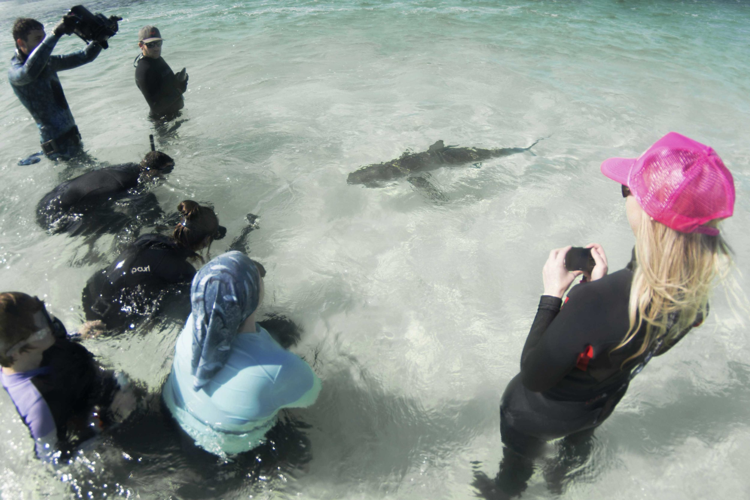 Multiple sharks showed their bold nature approaching head on!