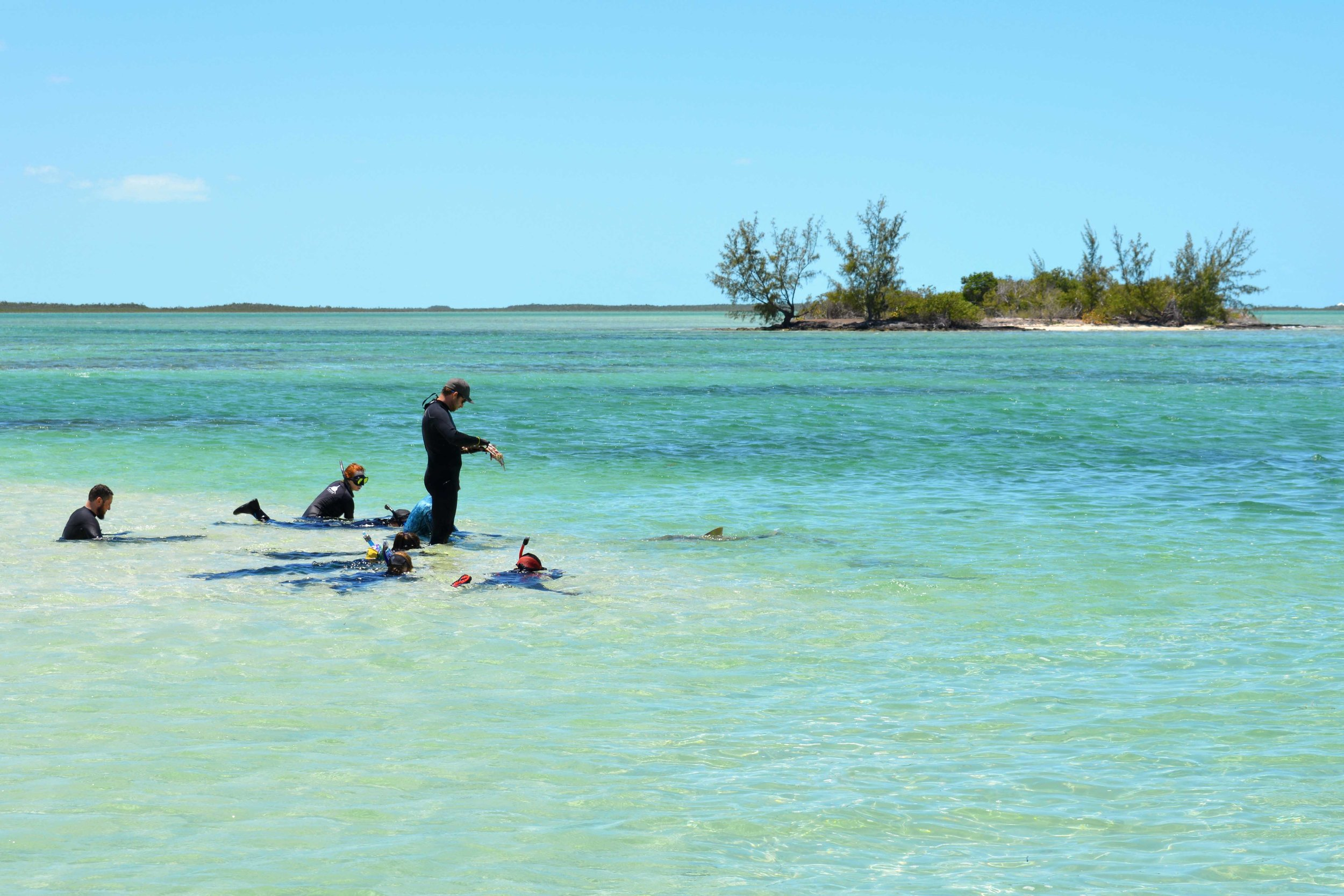 Guests relax and enjoy the view with over 12 lemon sharks just a few feet away!