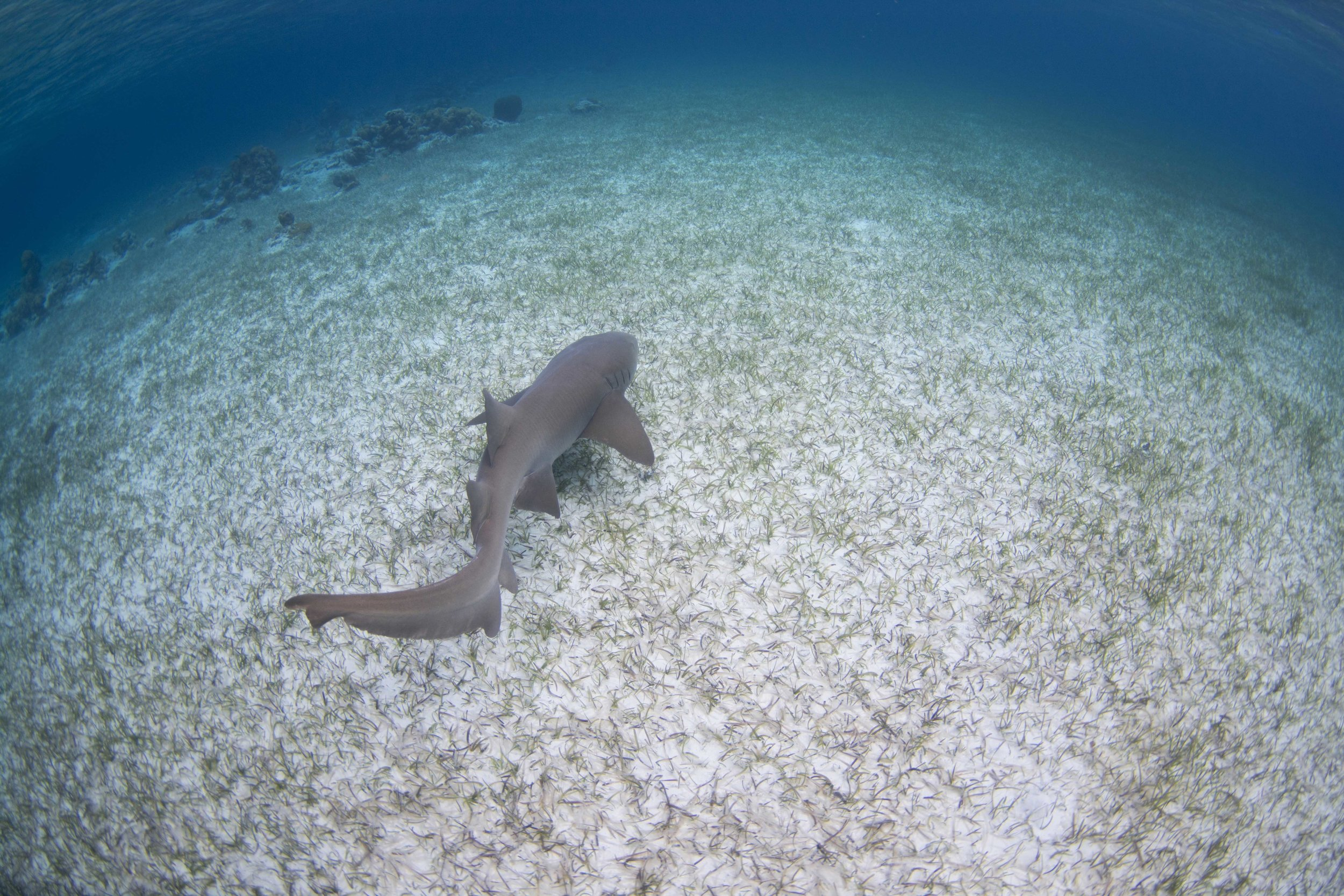 Guest Drew and trip leader Annie saw the nurse shark swim away strong on release