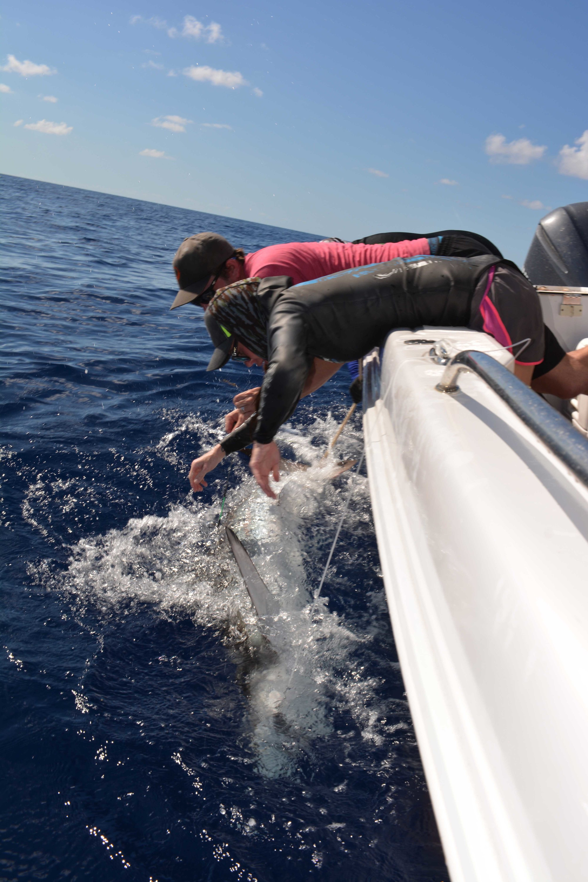 Securing the shark for safety