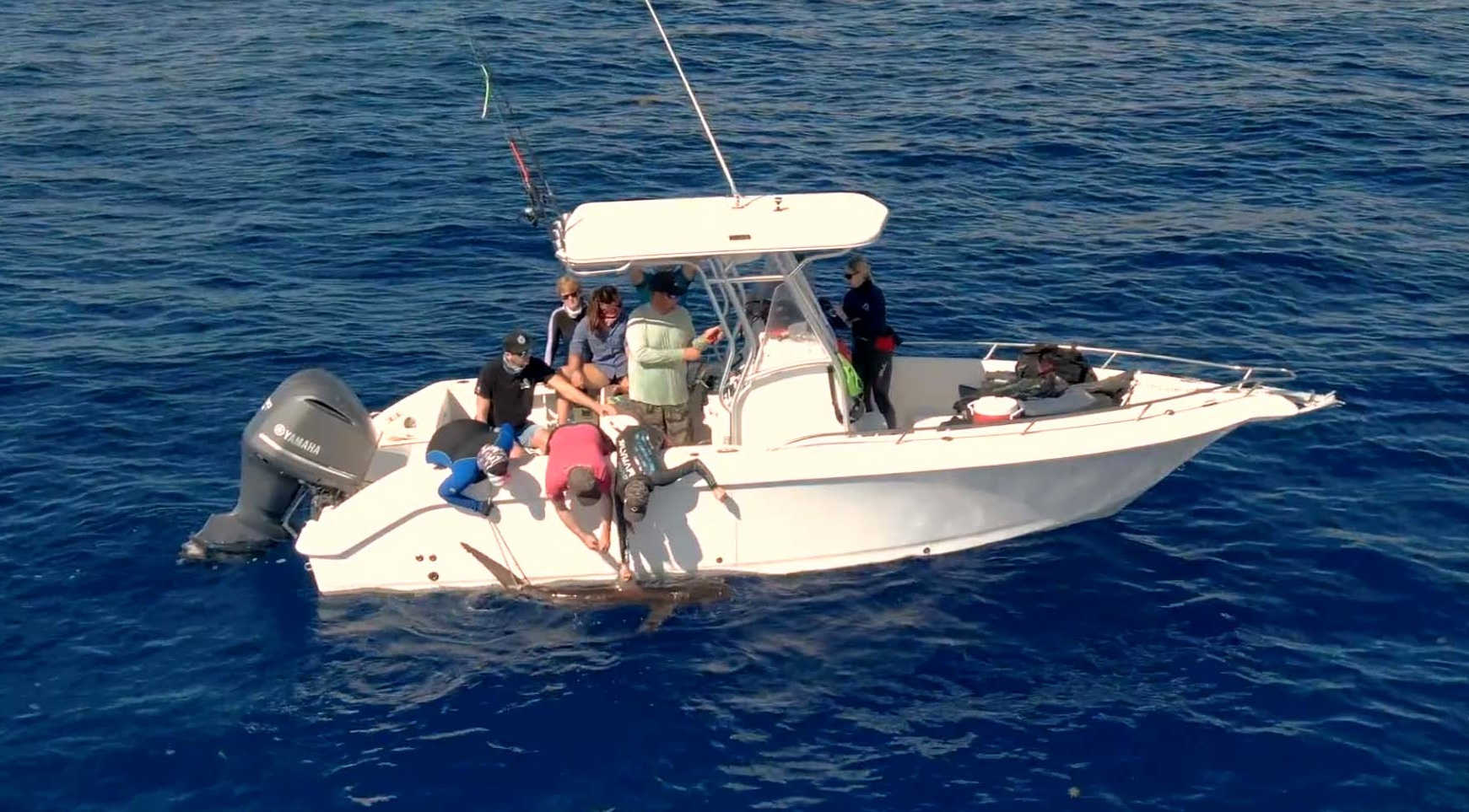 Expedition leaders Dr. Tristan and Annie Guttridge attached a satellite tag to a silky shark
