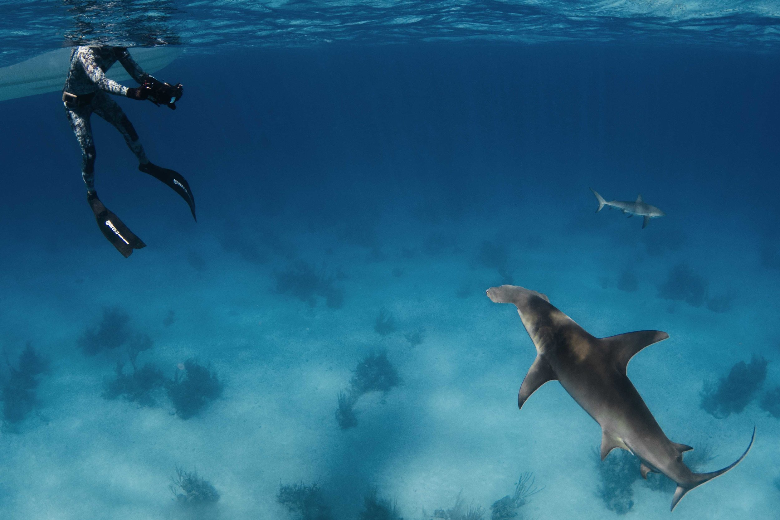 Expedition guest Vince comes face to face with a great hammerhead!
