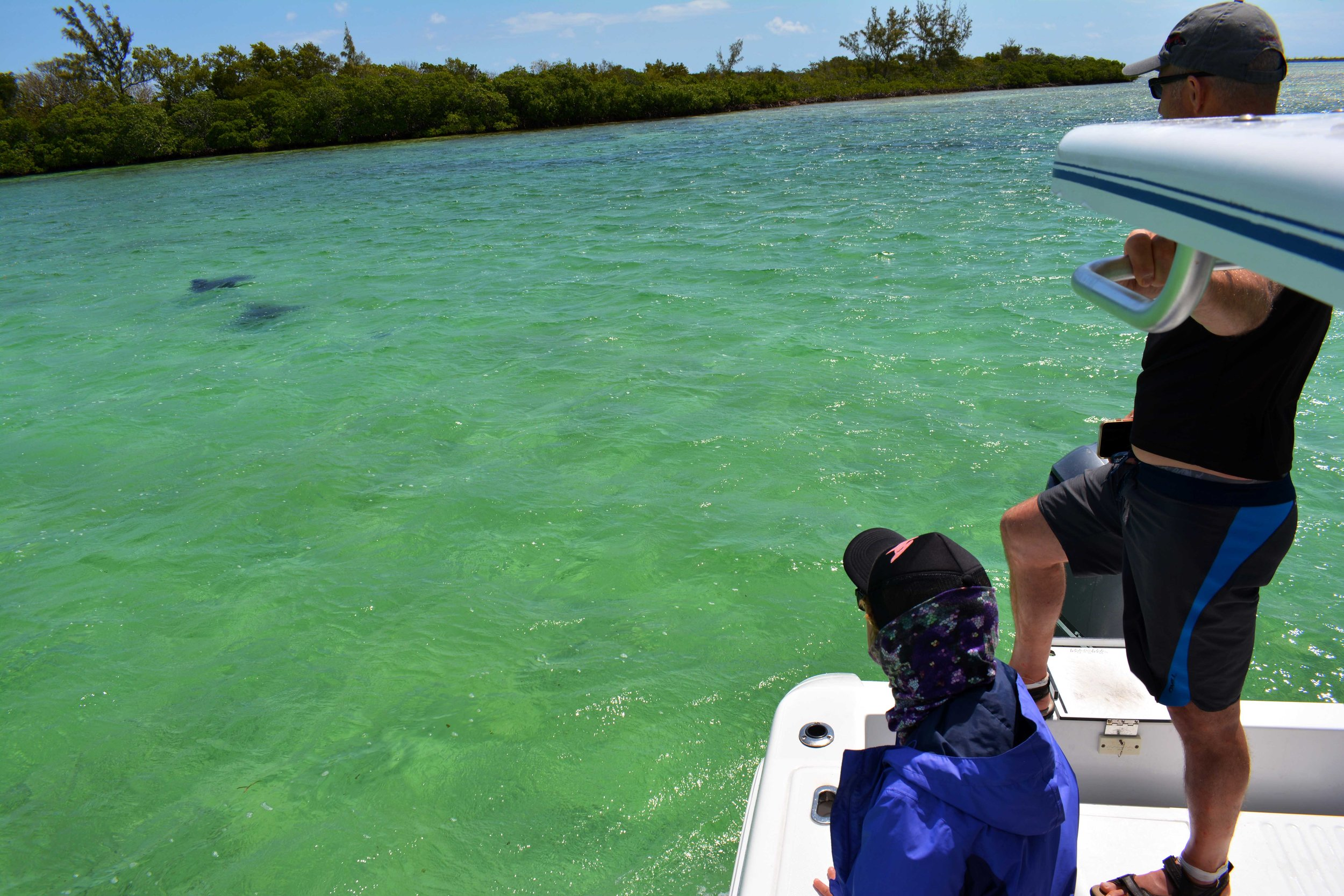 Guests Ian and Pam enjoy two eagle rays cruising past