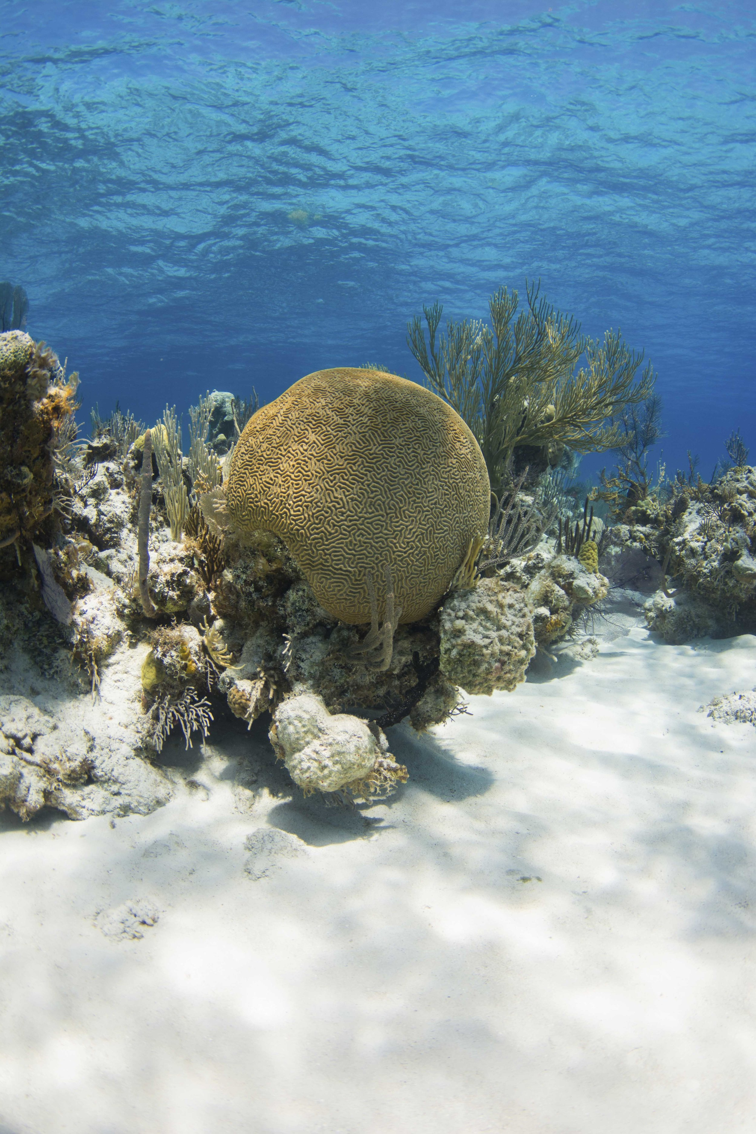 Andros is filled with stunning corals and reefs