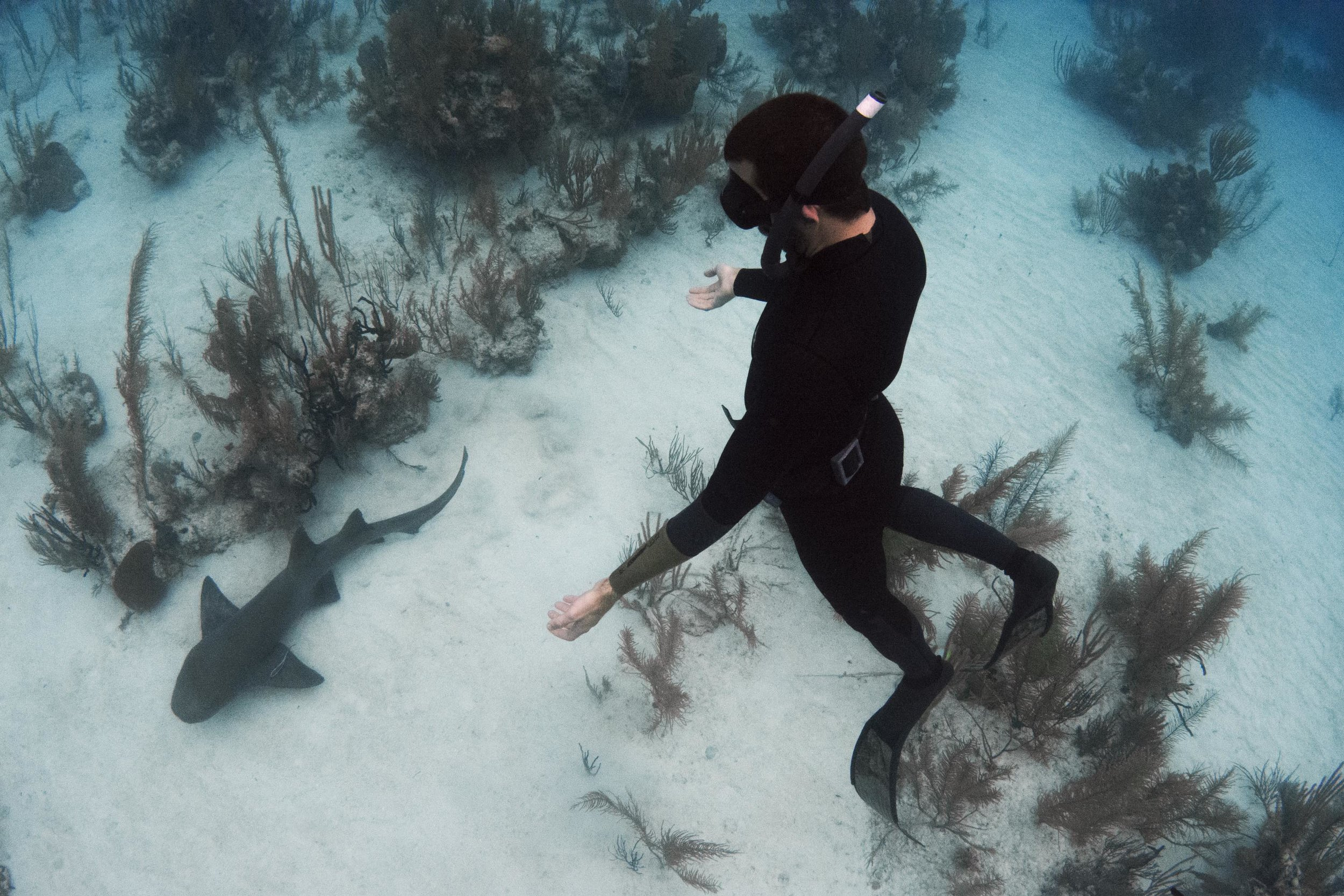 Expedition guest Carlos freedives with a nurse shark