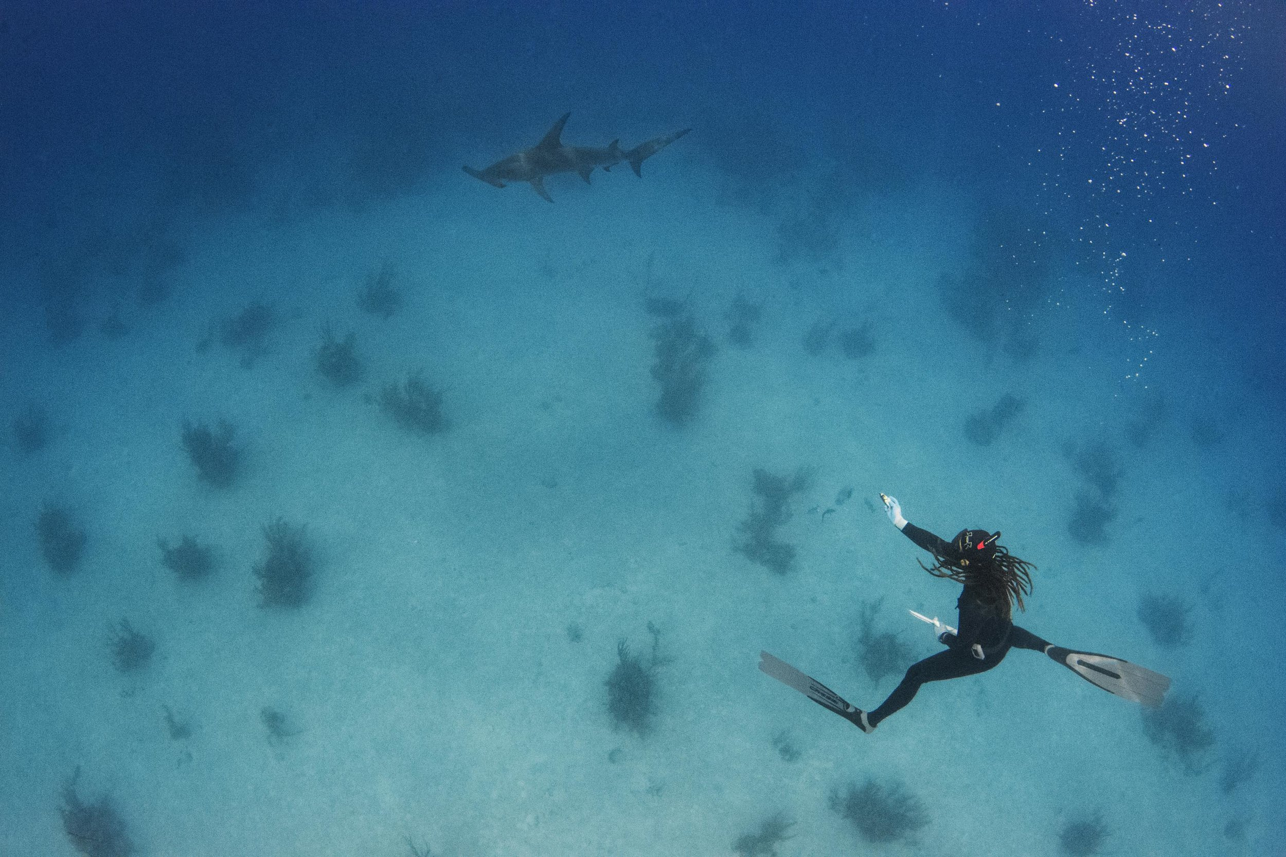 A very special sighting, one of two Great hammerheads seen by guests on day 1