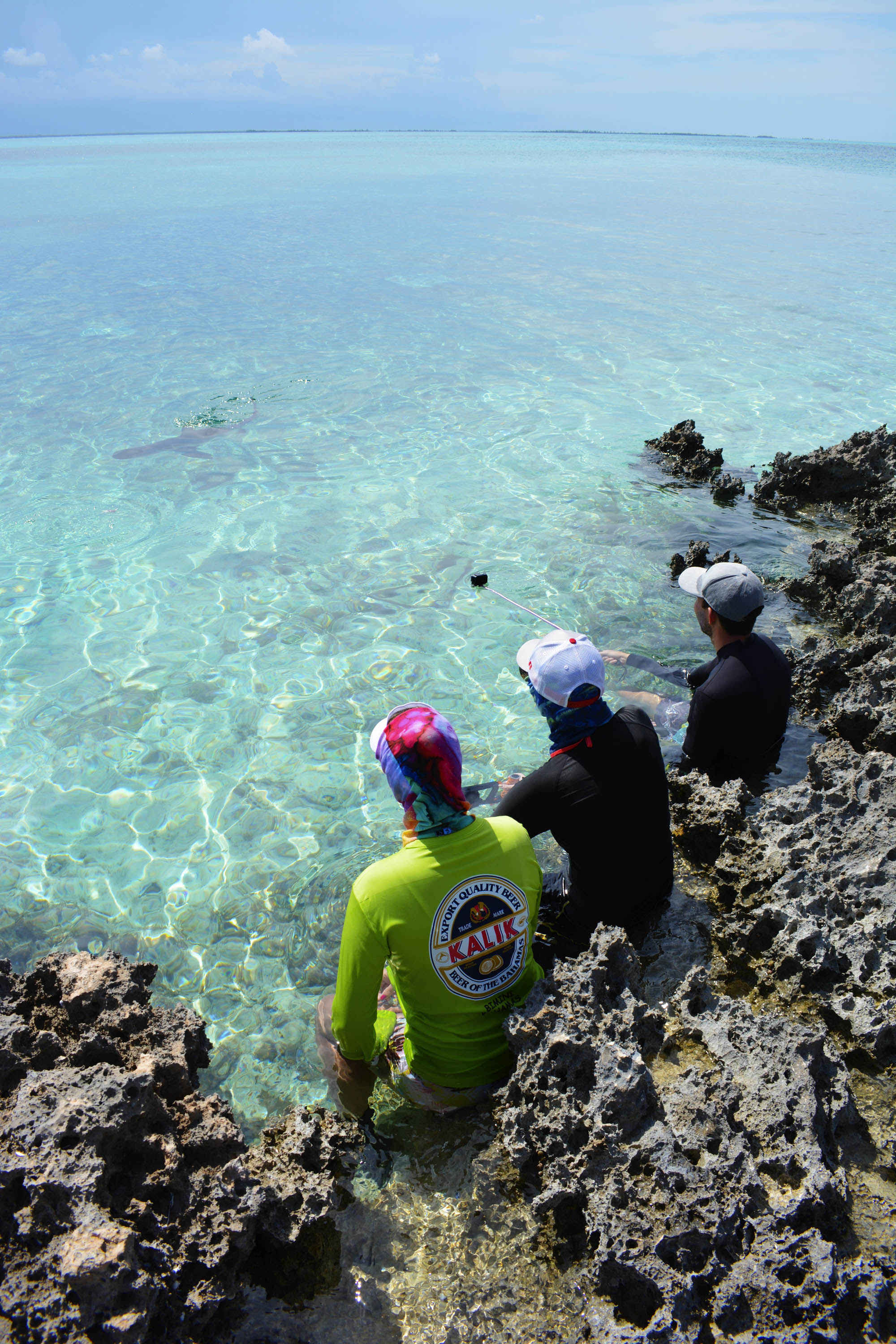 Expedition guests enjoy watching a reef shark feeding