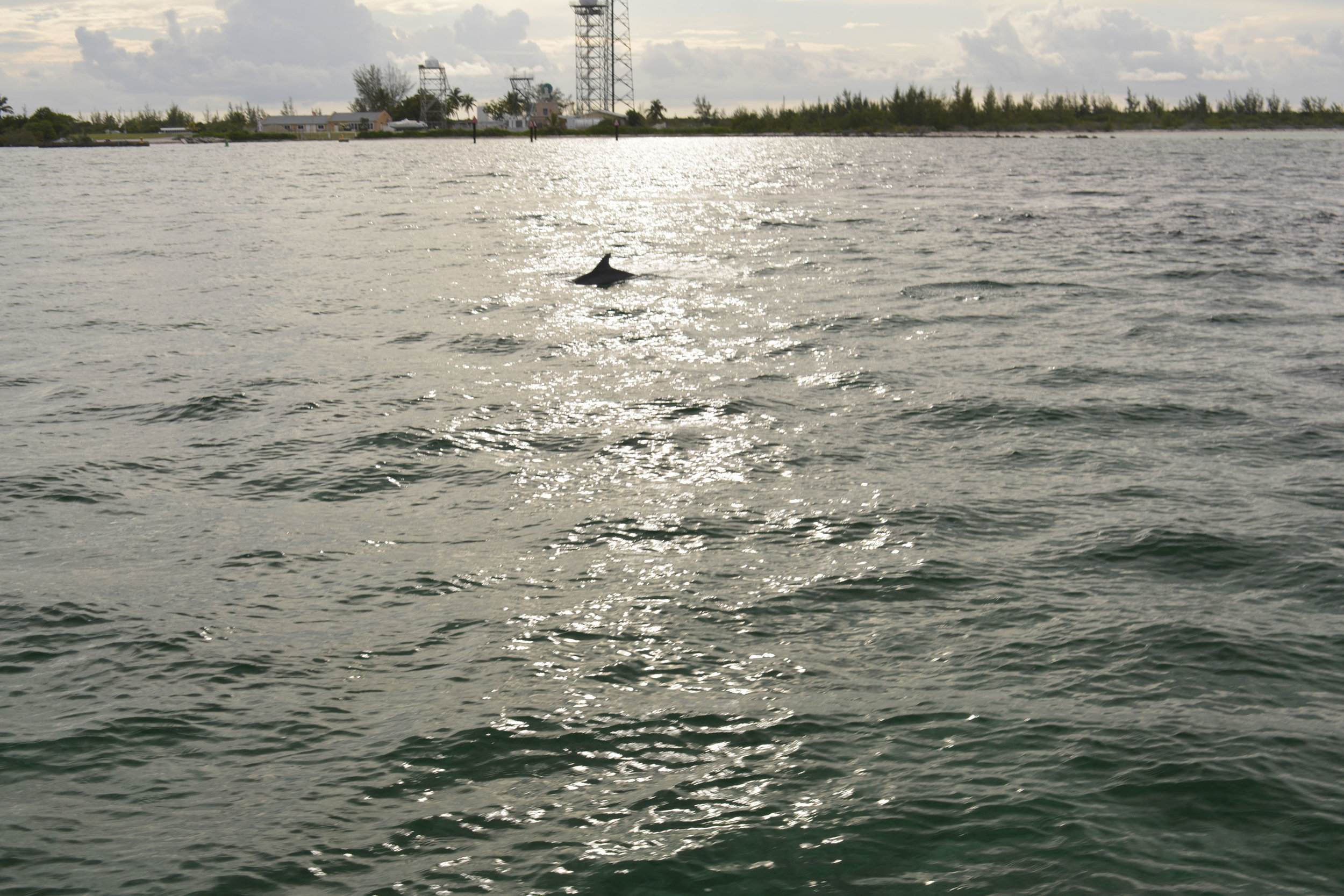 A pod of 15+ dolphins joined the expedition boat just as the sun was setting