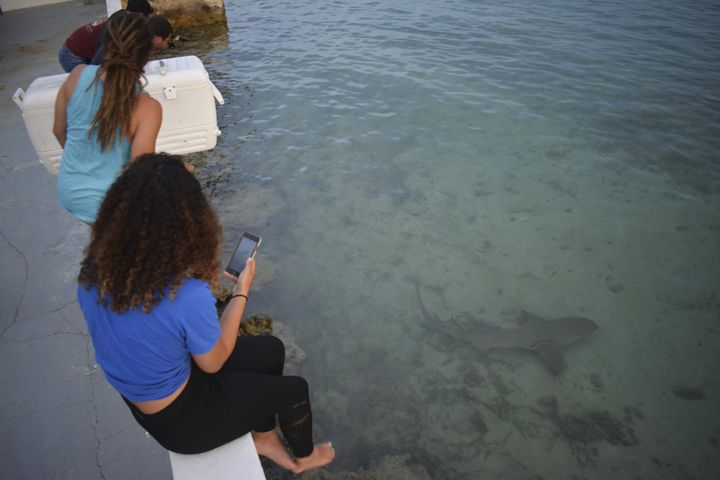 Guests enjoy the local lemon sharks before bed