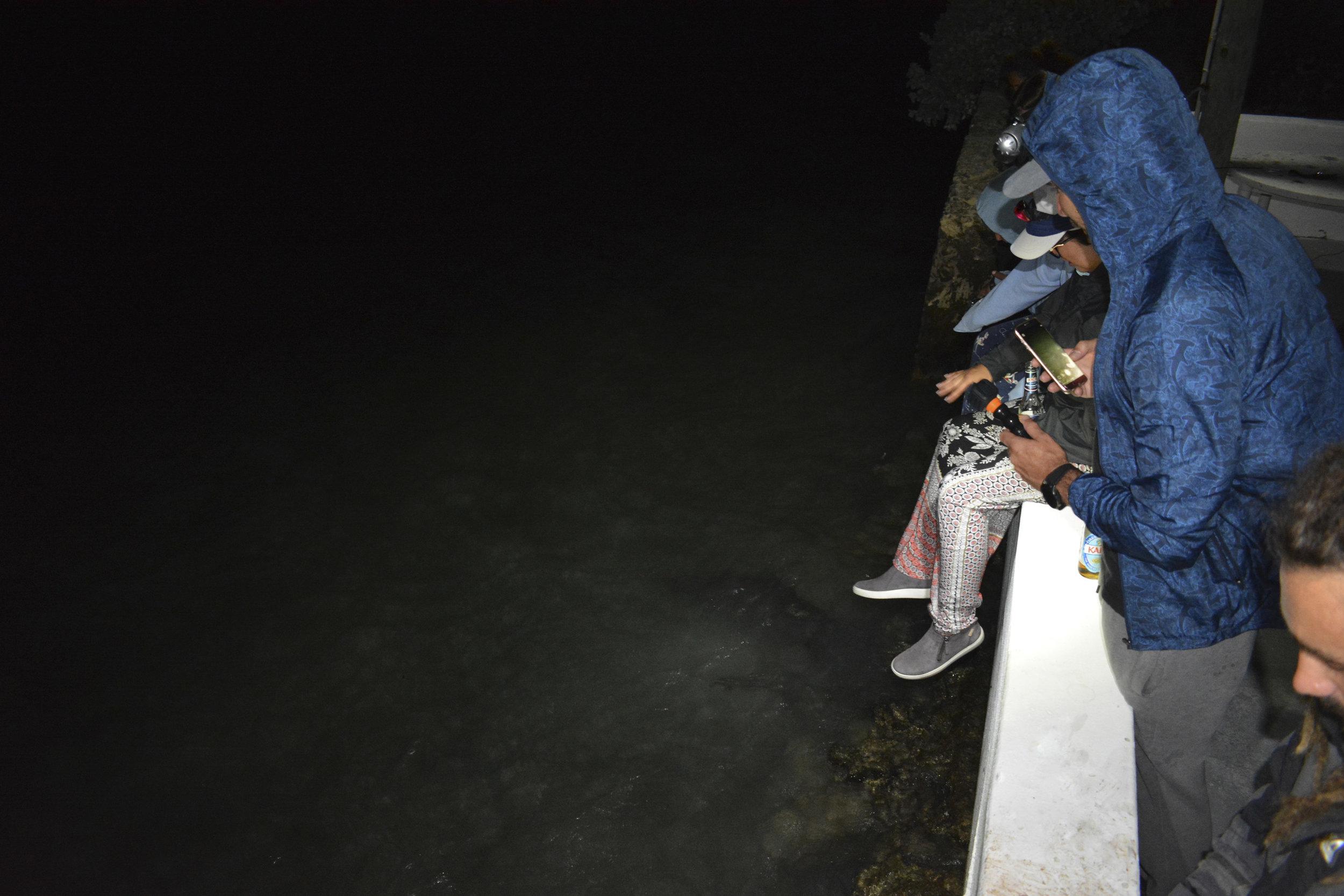 Guests enjoy some nighttime lemon shark action!