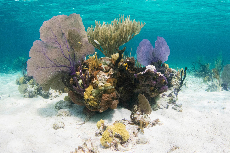 Rich, healthy corals are plentiful in Andros