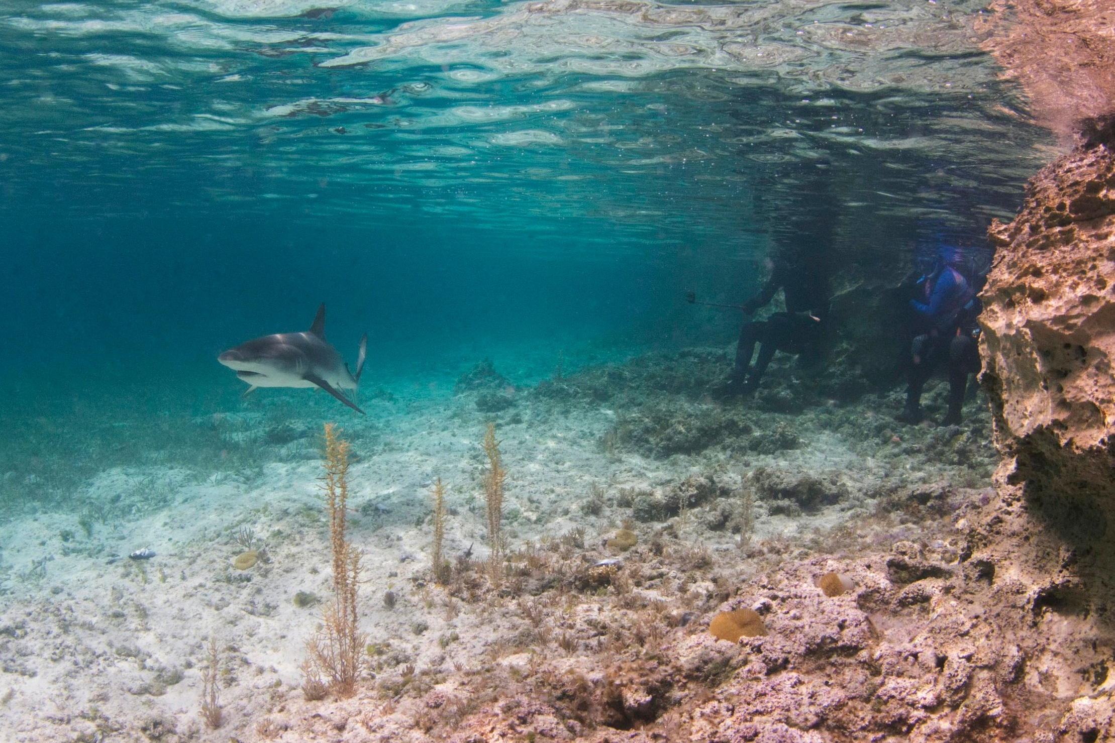Guest enjoy some close passes by a Caribbean reef shark