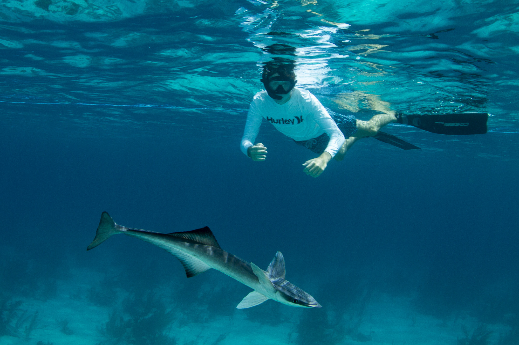 Guest Boris with an inquisitive, large remora