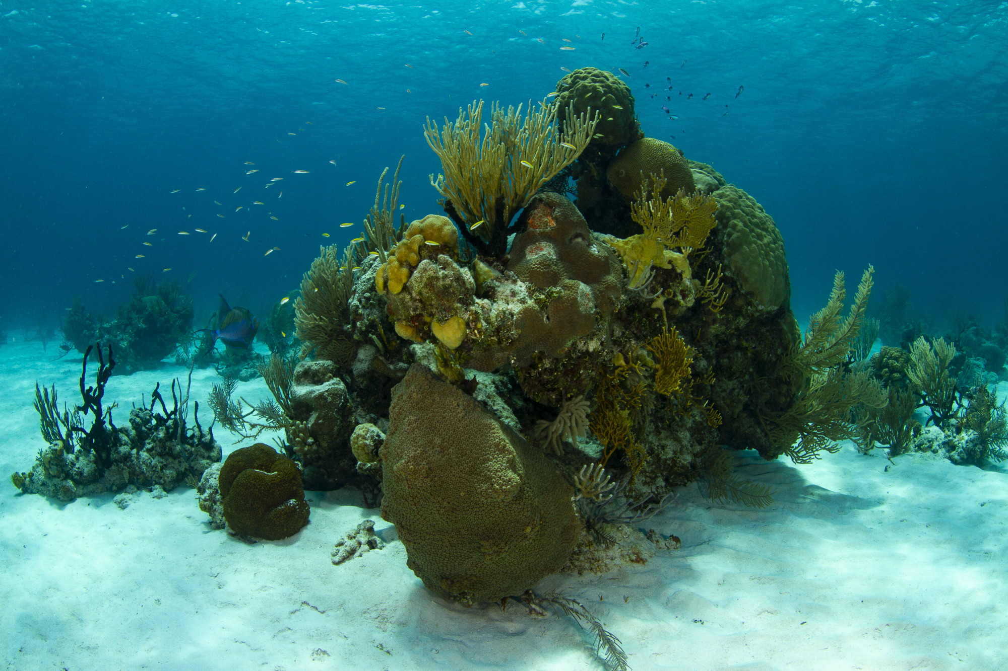 Some of the stunning corals found in Andros