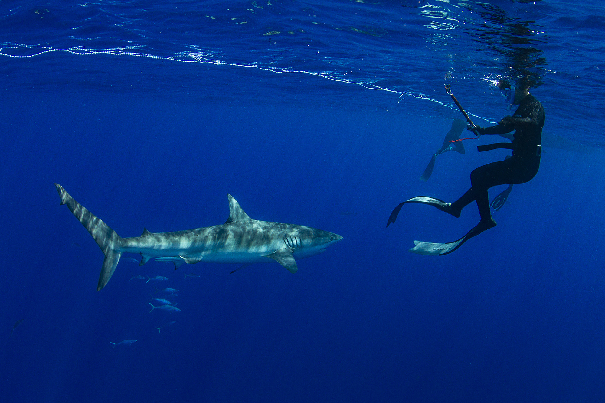 The dusky shark wasn't timid, making close passes to all divers in the water
