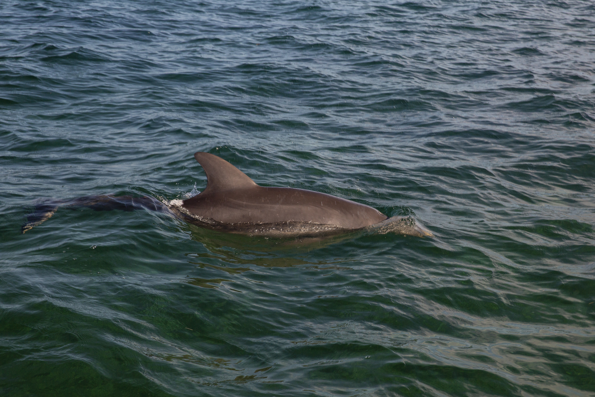 Wild dolphins played with our boat, curious and energetic