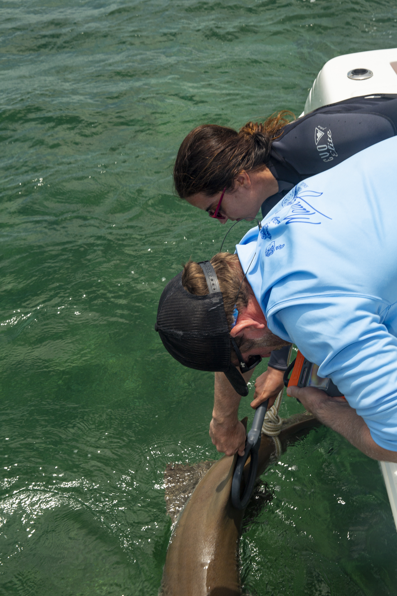 Shark research in action, which feeds into nonprofit    Saving the Blue