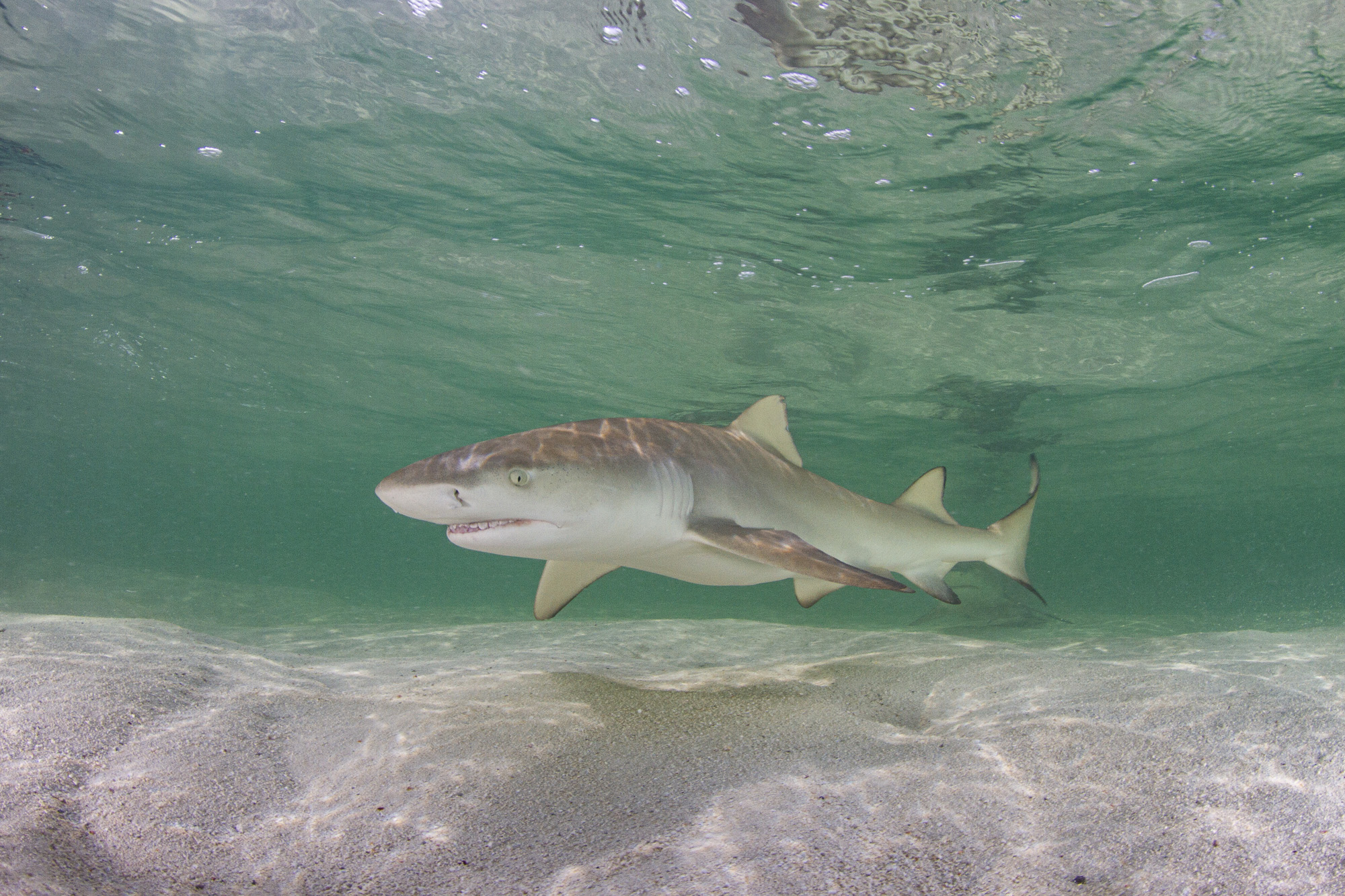 One of over twelve sharks swimming with us in the shallows