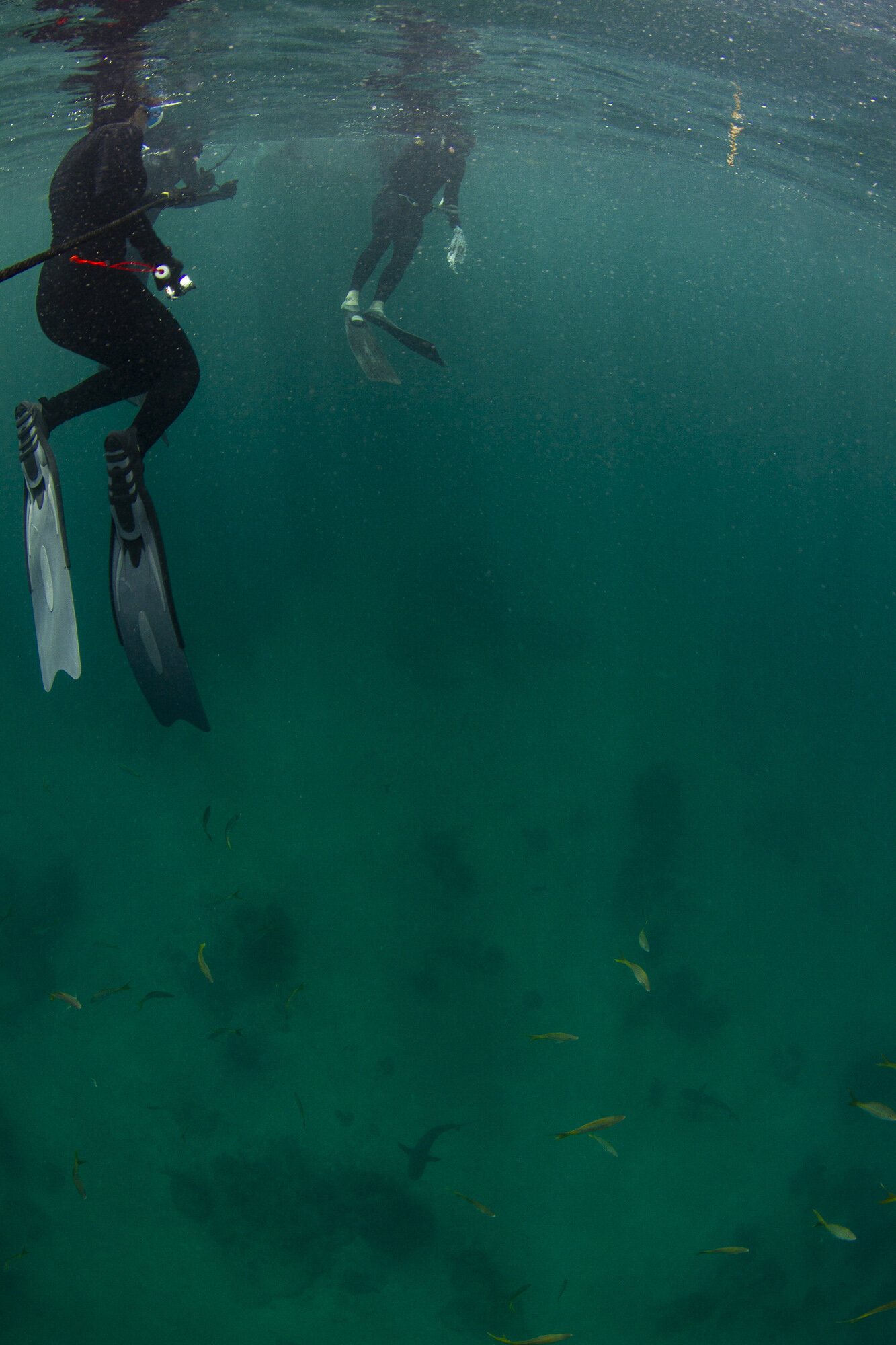 Guests gazed down on the sharks swimming below