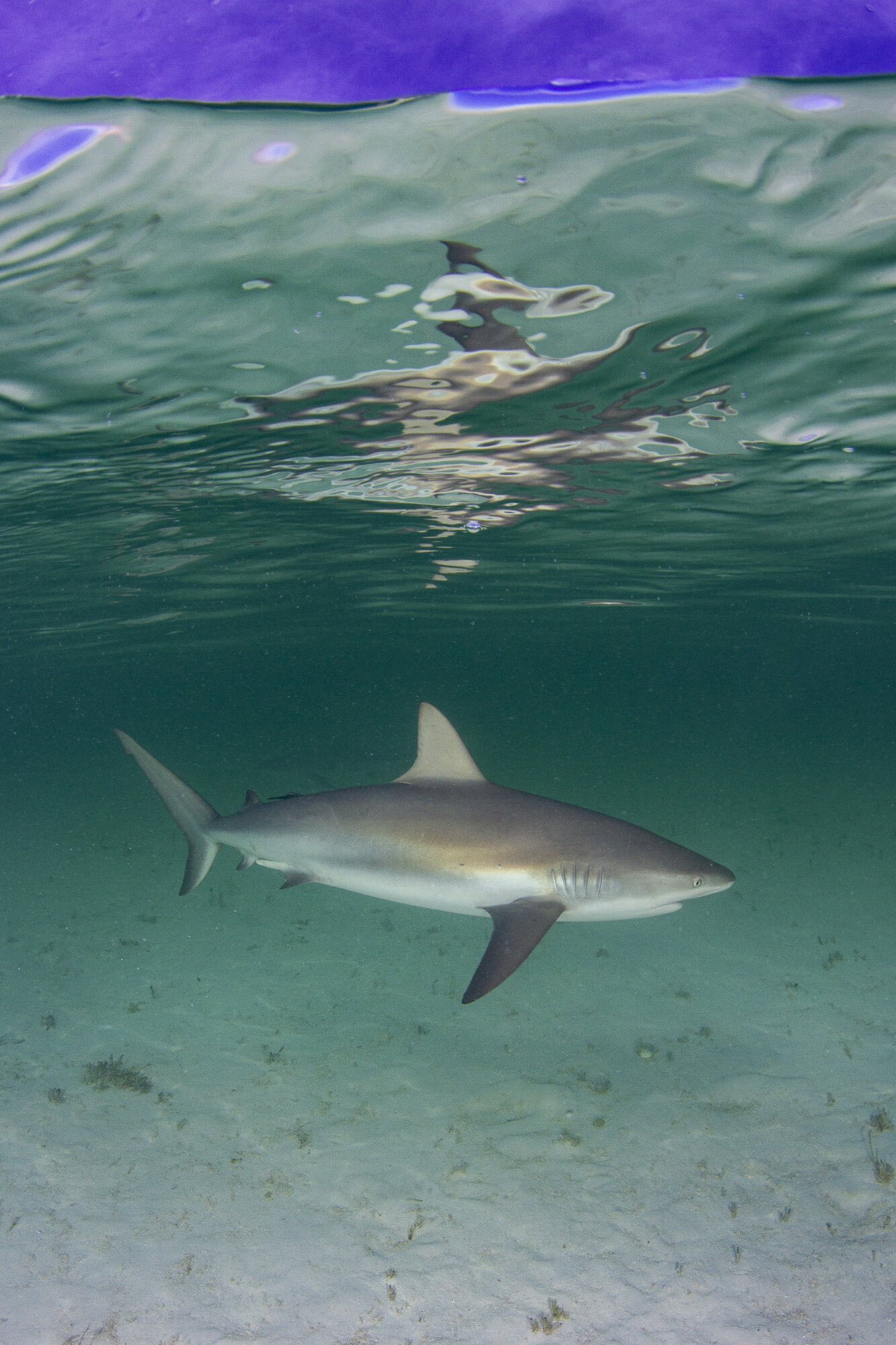 A bold reef shark took center stage during the activity!