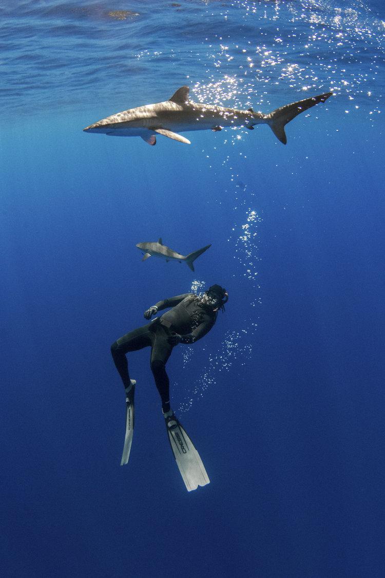Silent Hunter - Annie Dr Tristan Guttridge -Sharks - Shark - Hammerhead - The Bahamas - Andros - Shark Diving - Eco - Eco Tourism - Silky Shark  Freediving.jpg