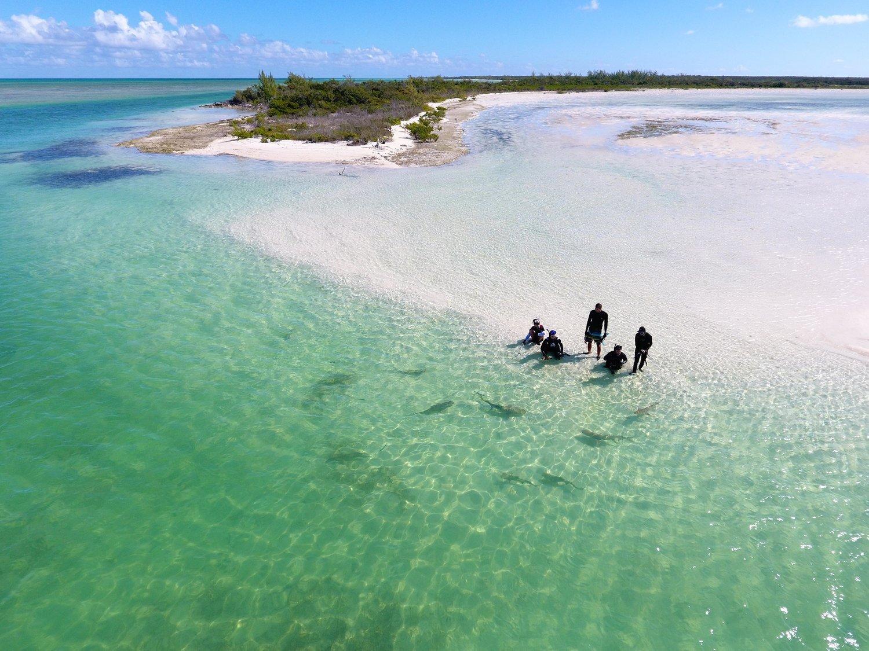 Silent Hunter - Annie Dr Tristan Guttridge -Sharks - Shark - Hammerhead - The Bahamas - Andros - Shark Diving - Eco - Eco Tourism - Beach.jpg
